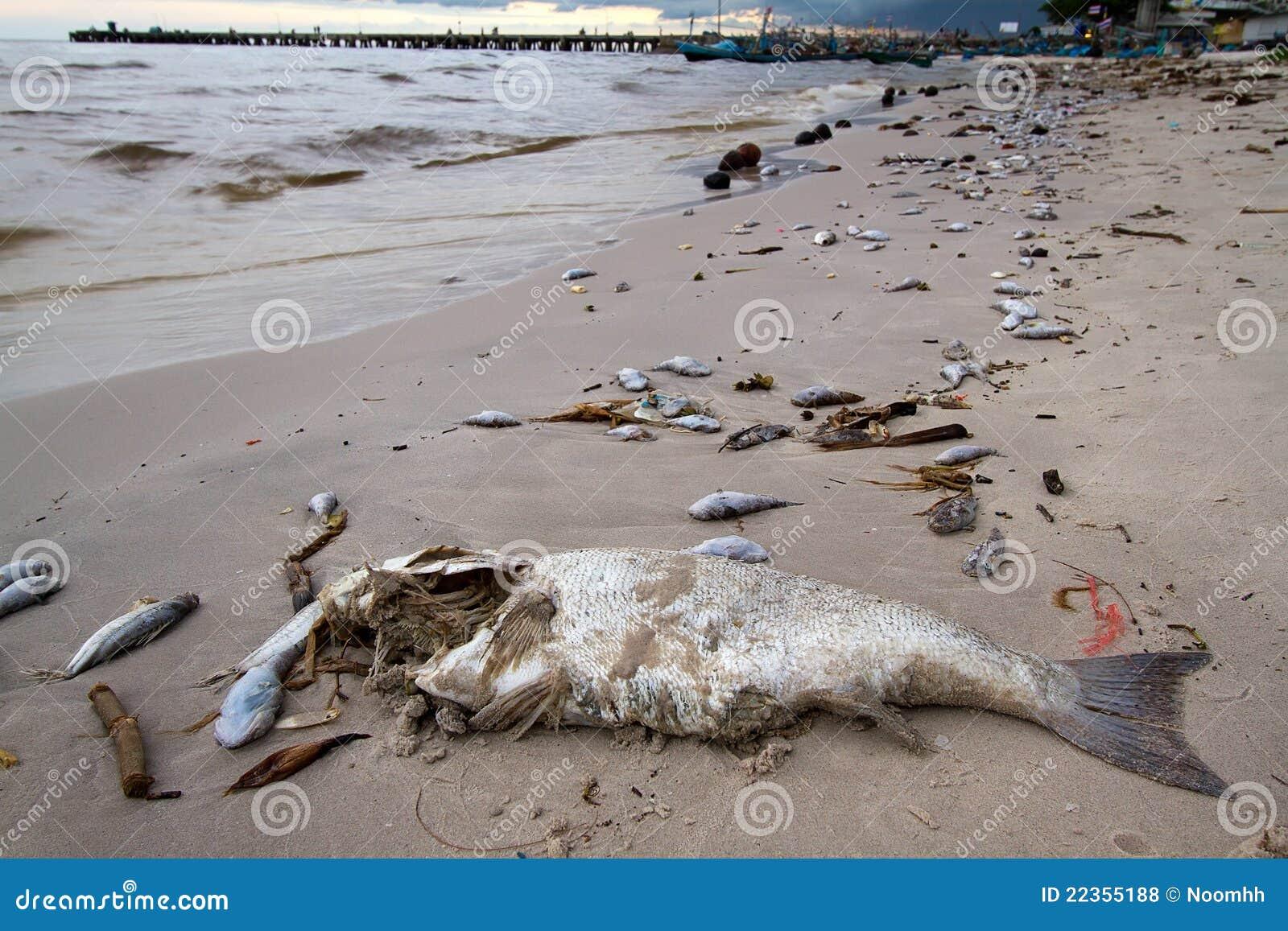 海滩停止的鱼