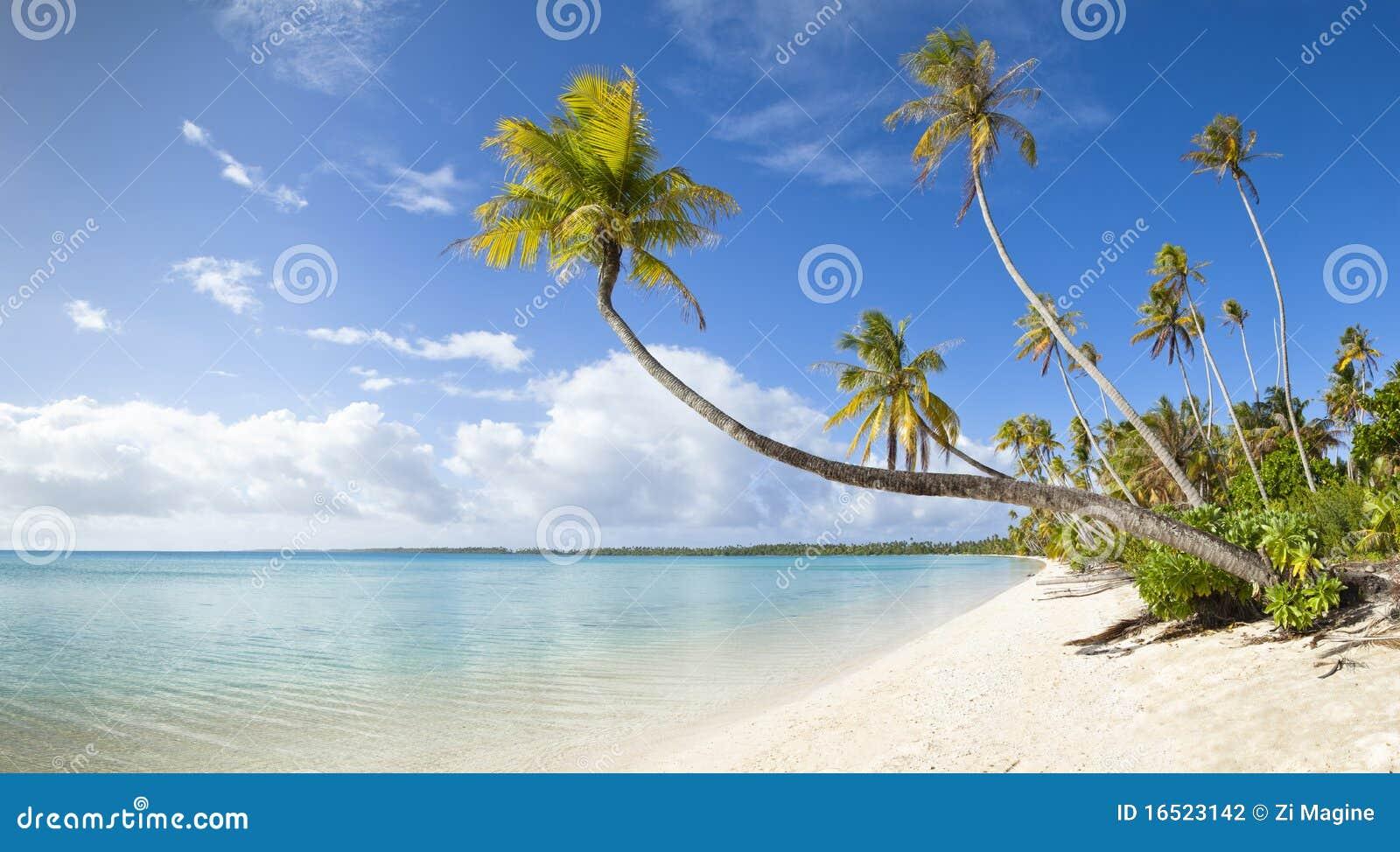 海滩全景沙子热带视图白色