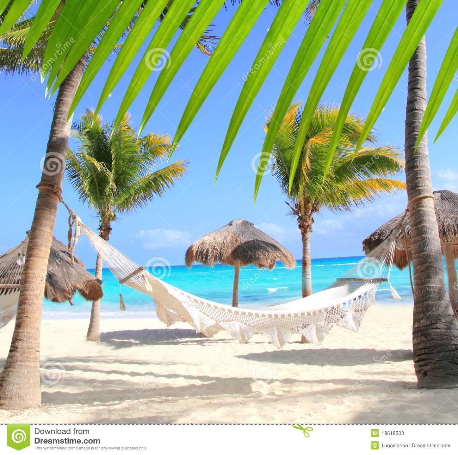 海滩加勒比吊床棕榈树