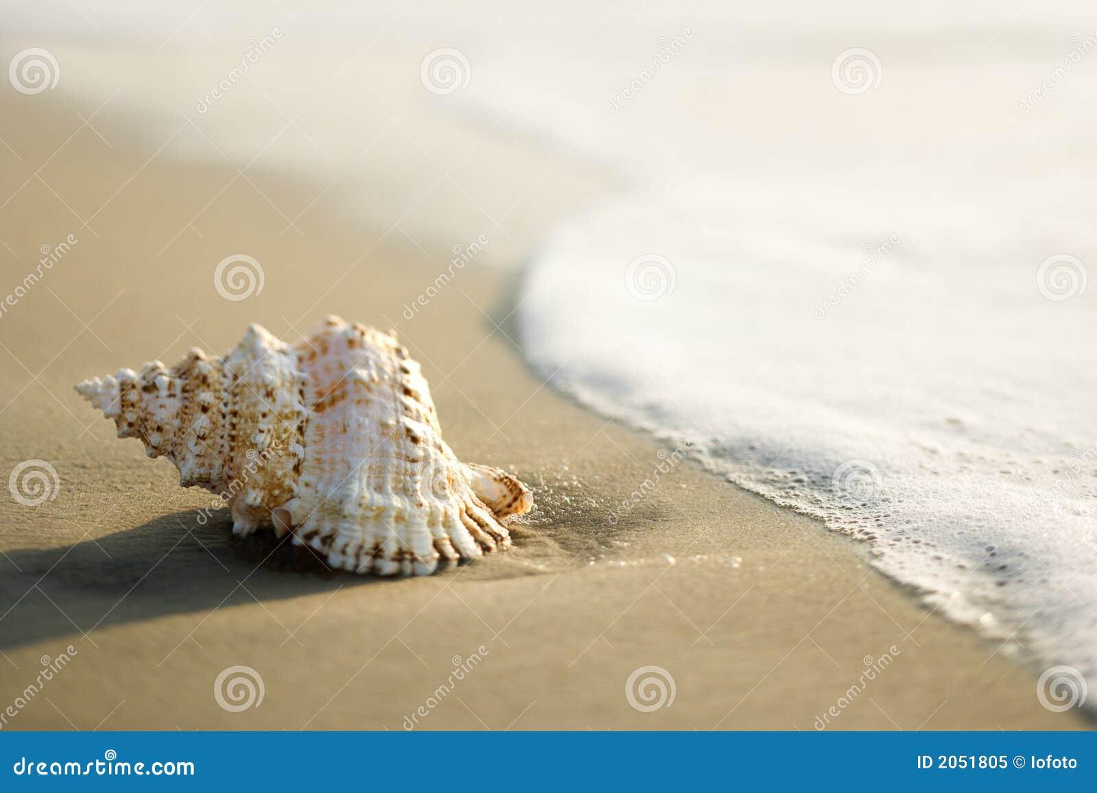 海滩巧克力精炼机壳