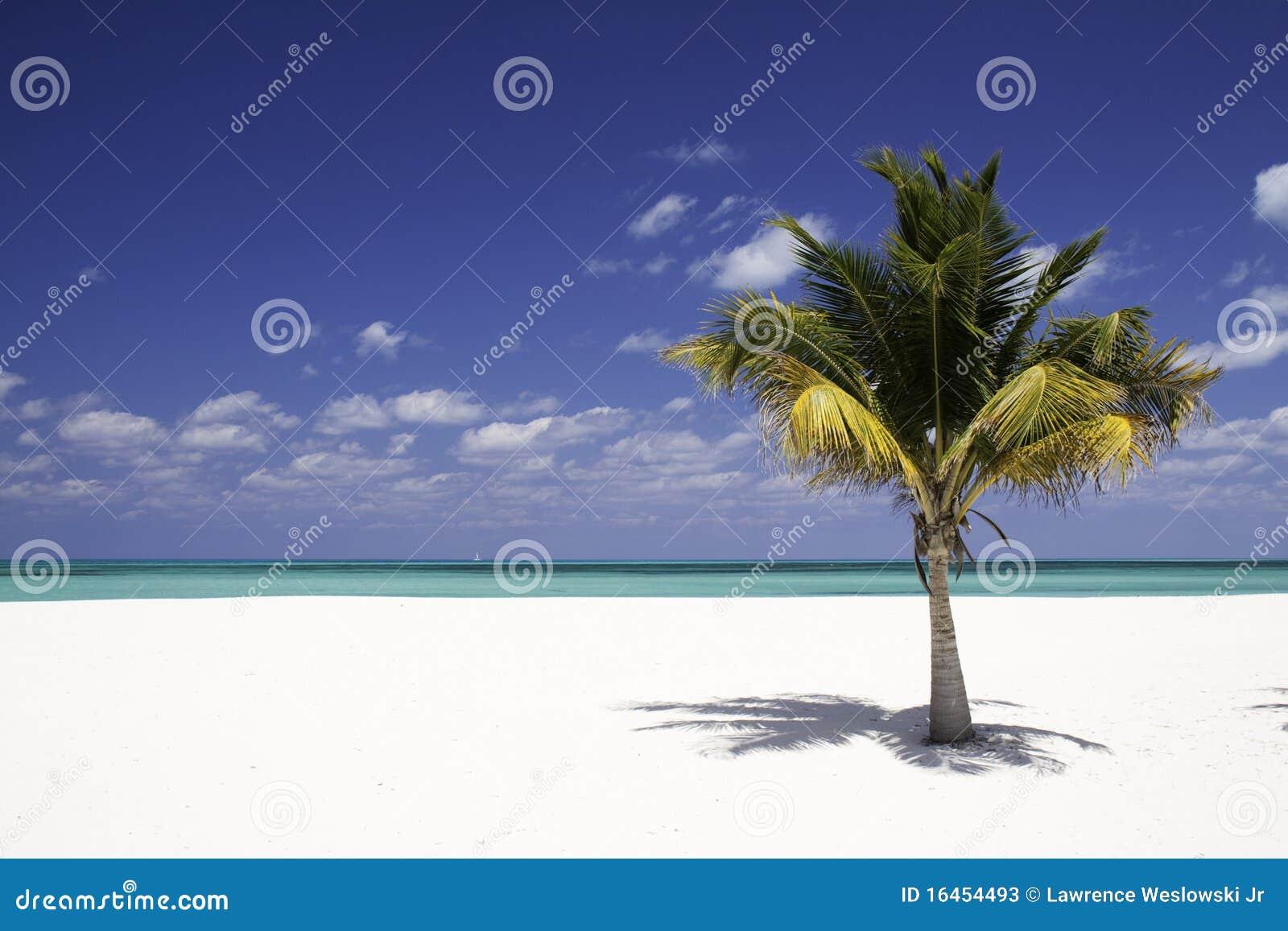 海滩掌上型计算机沙子孑然结构树白&#