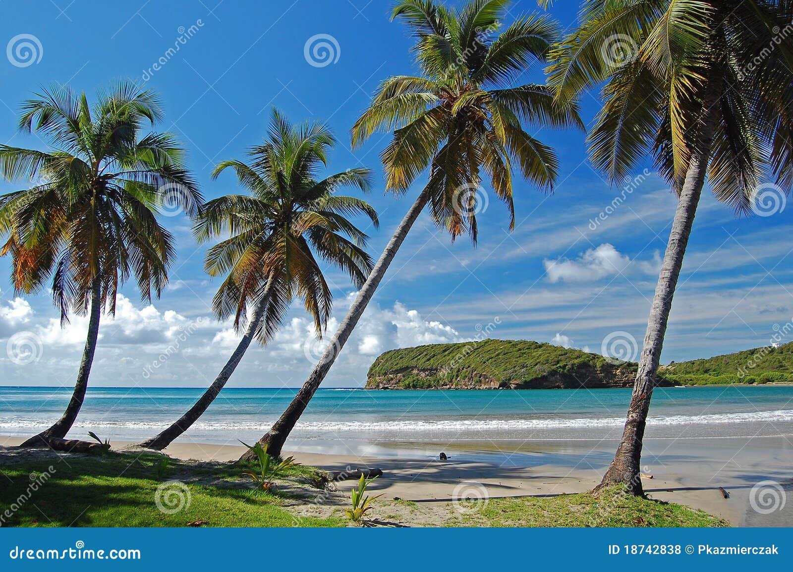 海滩格林那达海岛la掌上型计算机sagesse结&