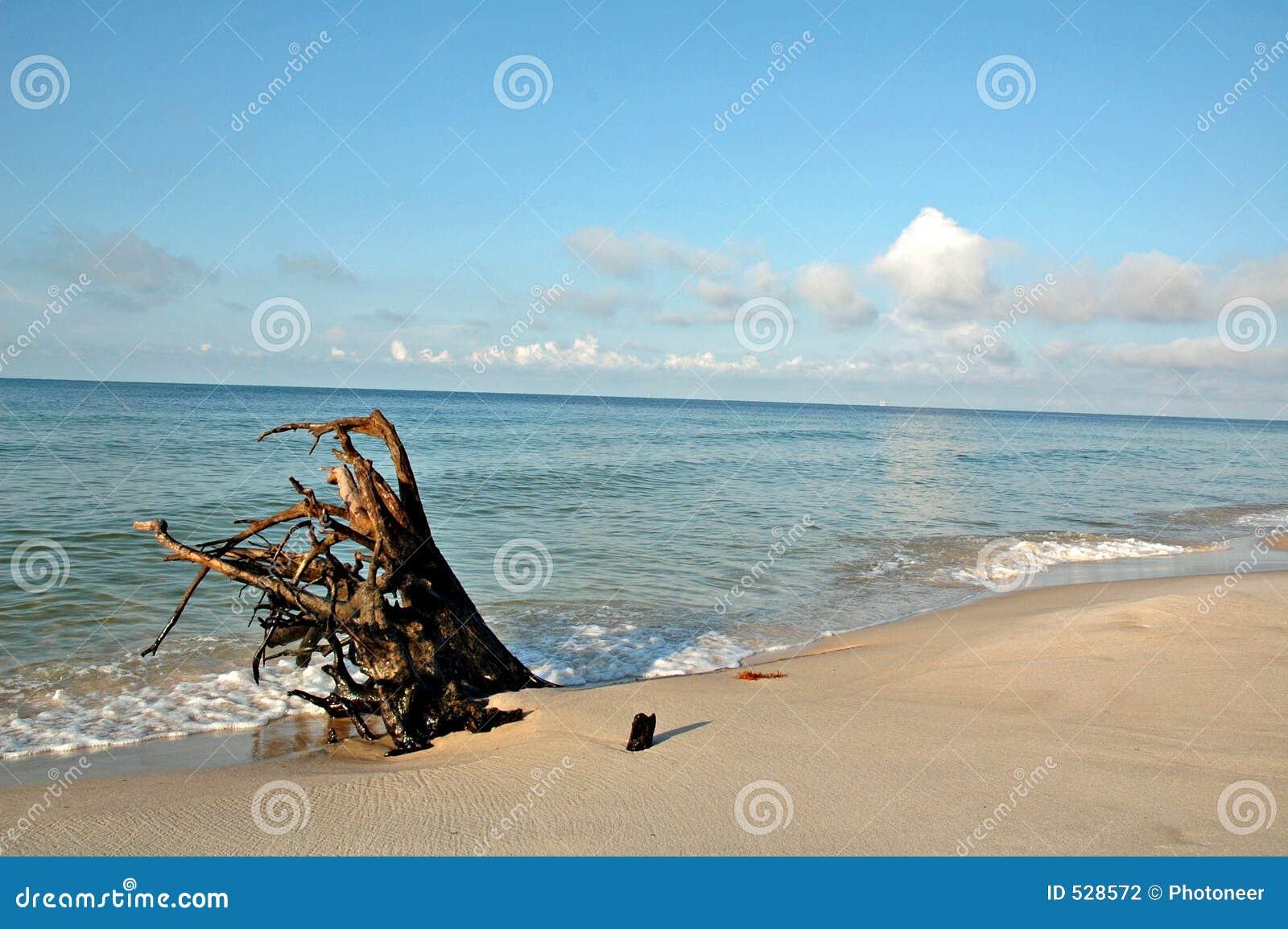 Download 海滩漂流木头 库存照片. 图片 包括有 天空, 云彩, 热带, 海运, 结构树, 海洋, 蓝色, 火箭筒, 沙子 - 528572