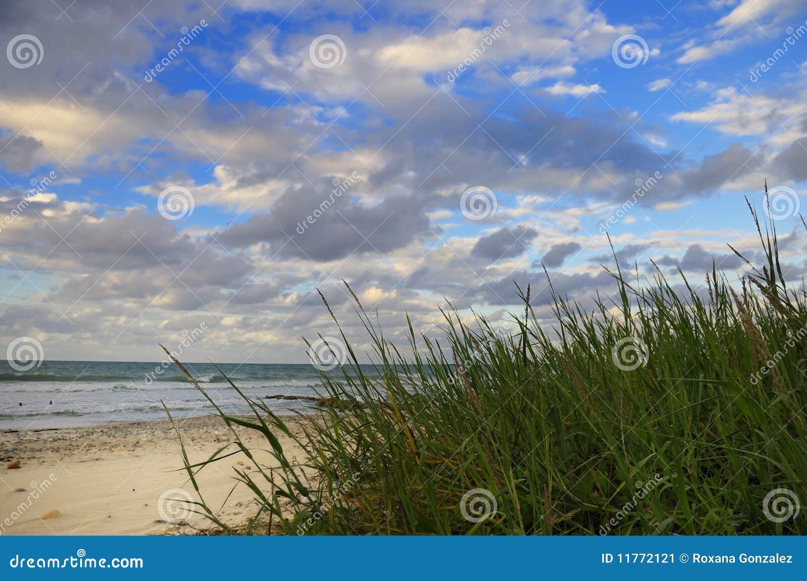 海滩热带植被