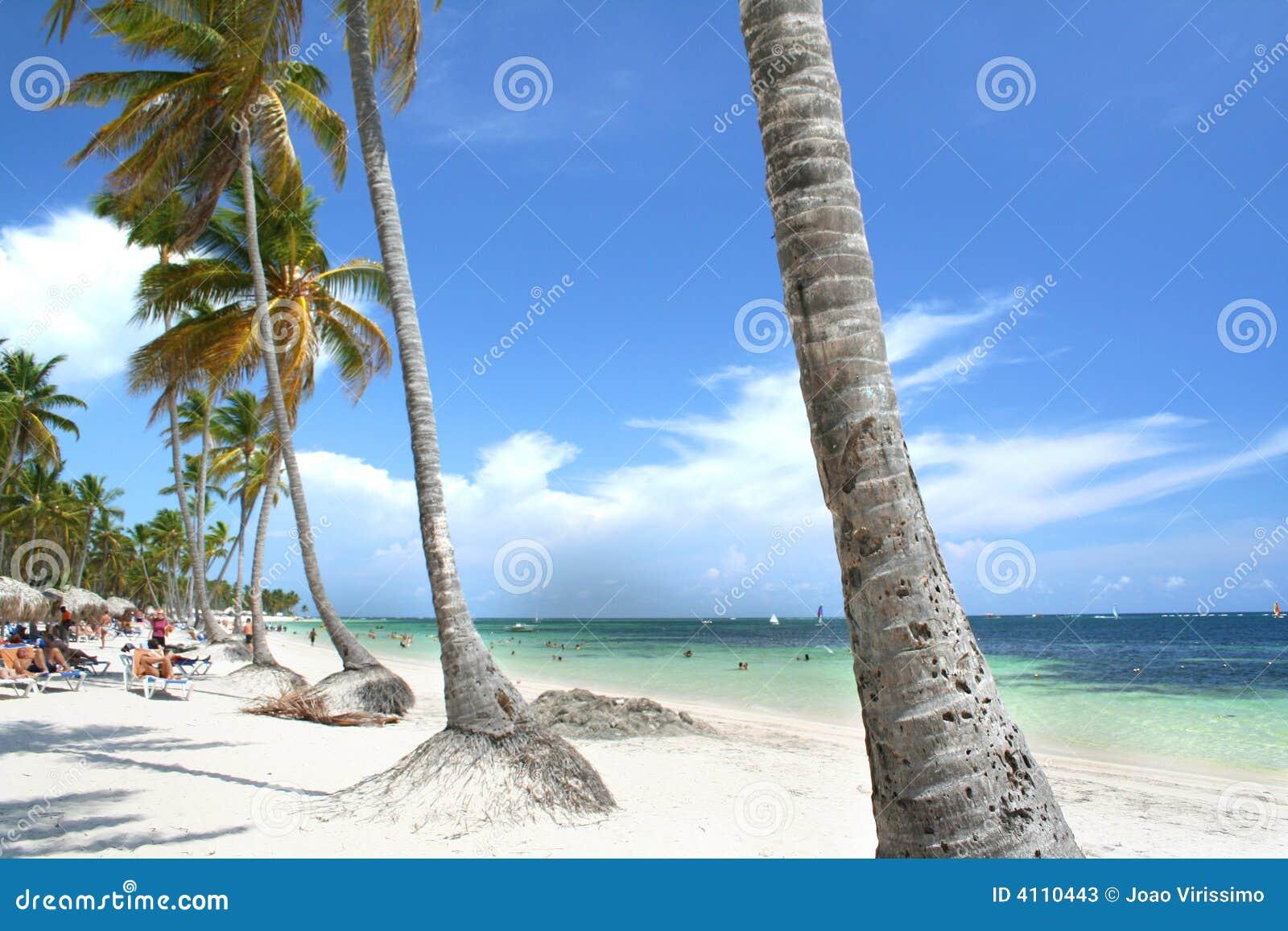 海滩热带被装饰的掌上型计算机手段的结构树
