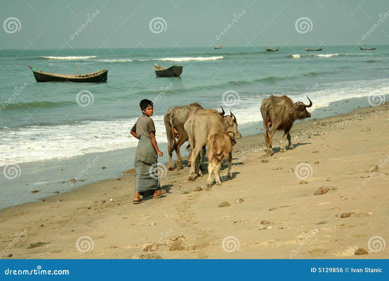 海滩牧羊人