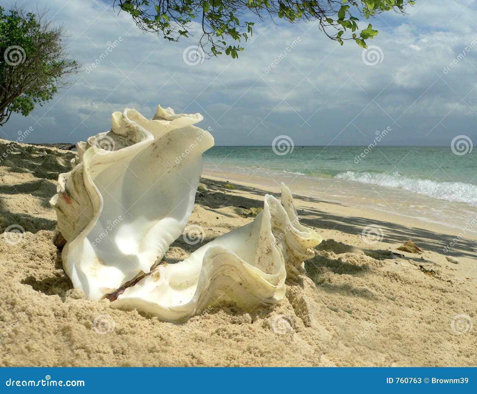 亚洲se图狠狠千人_亚洲海滩珊瑚牡蛎se壳.