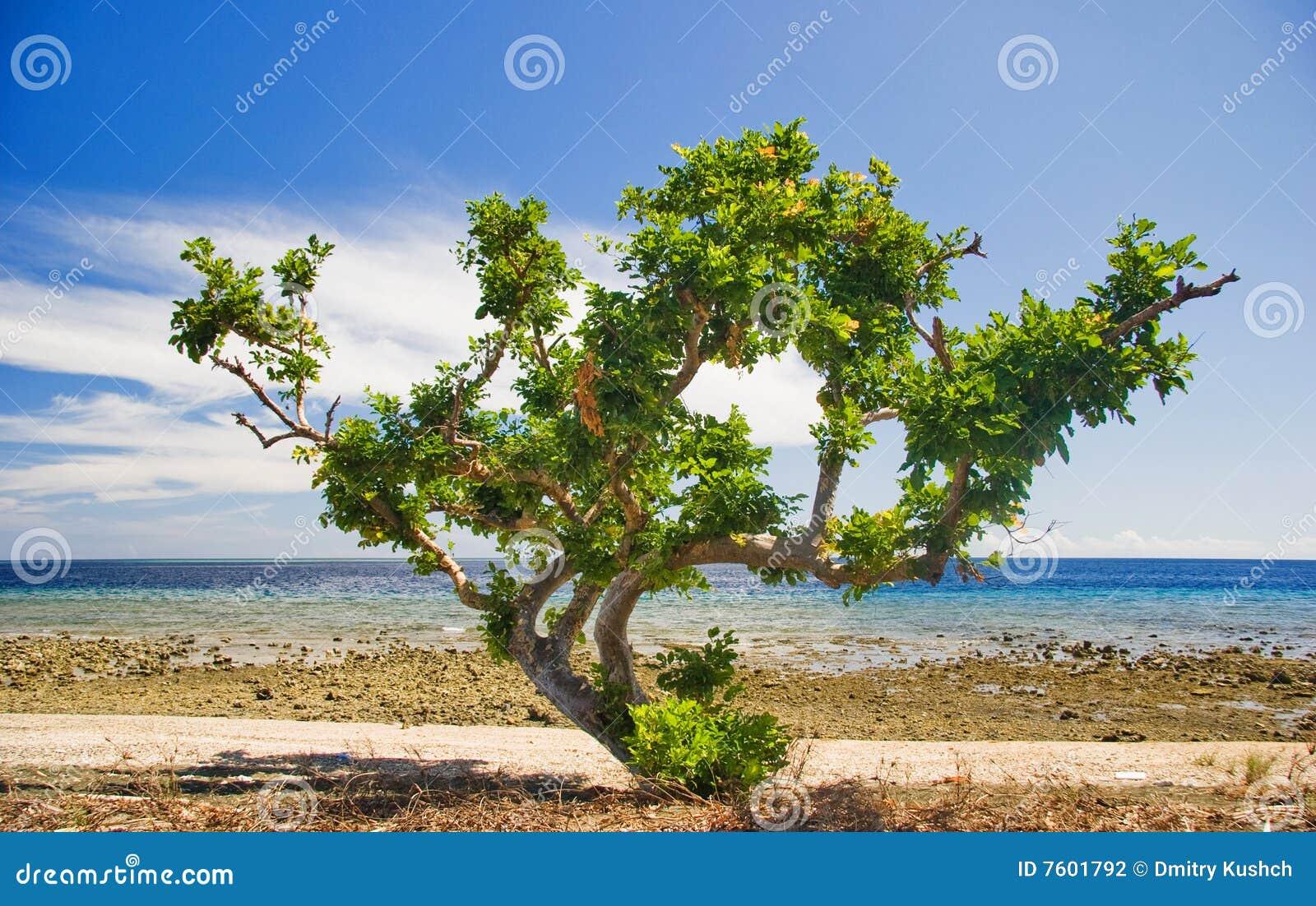 海滩结构树