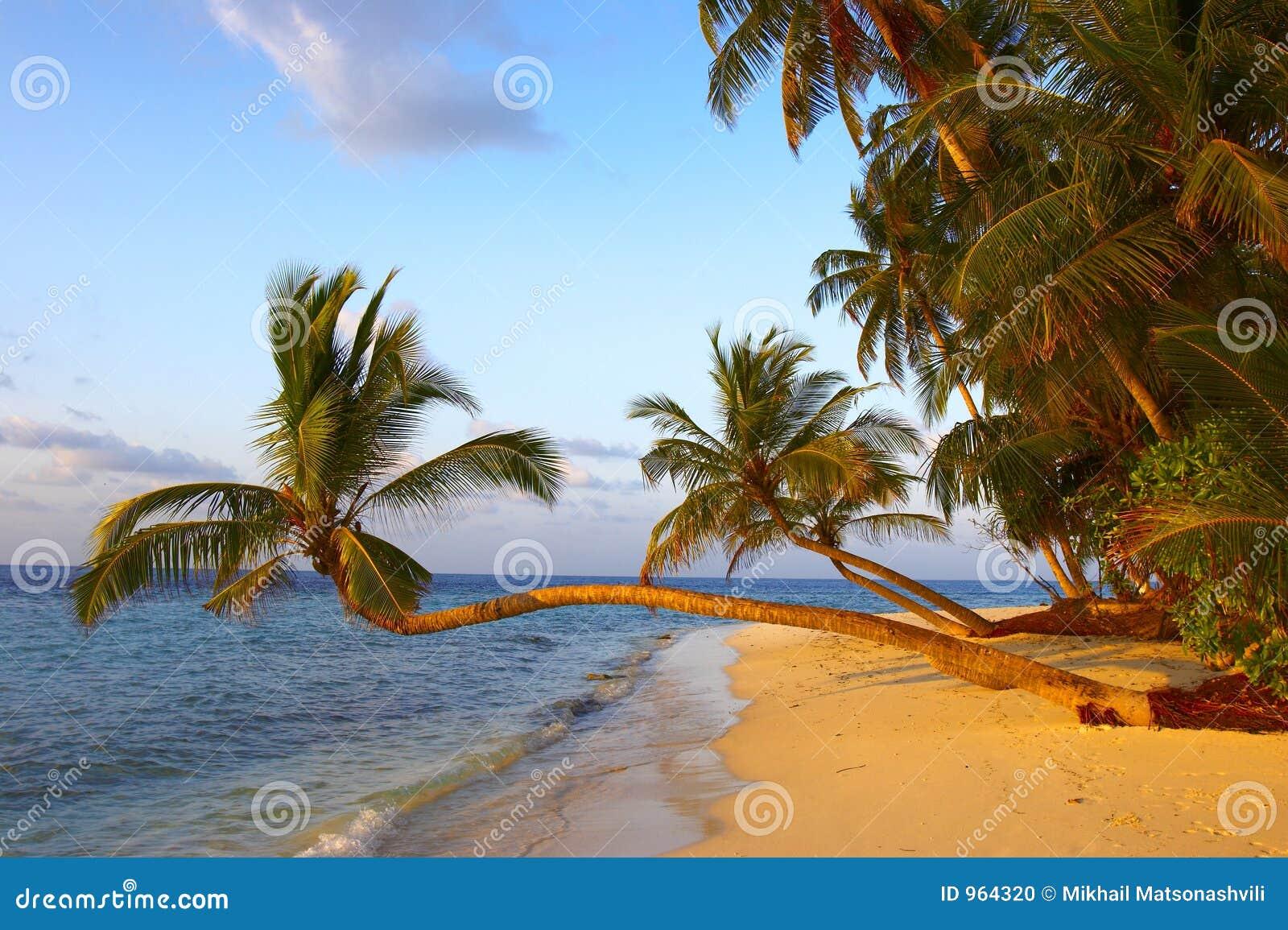海滩美妙的掌上型计算机日落结构树