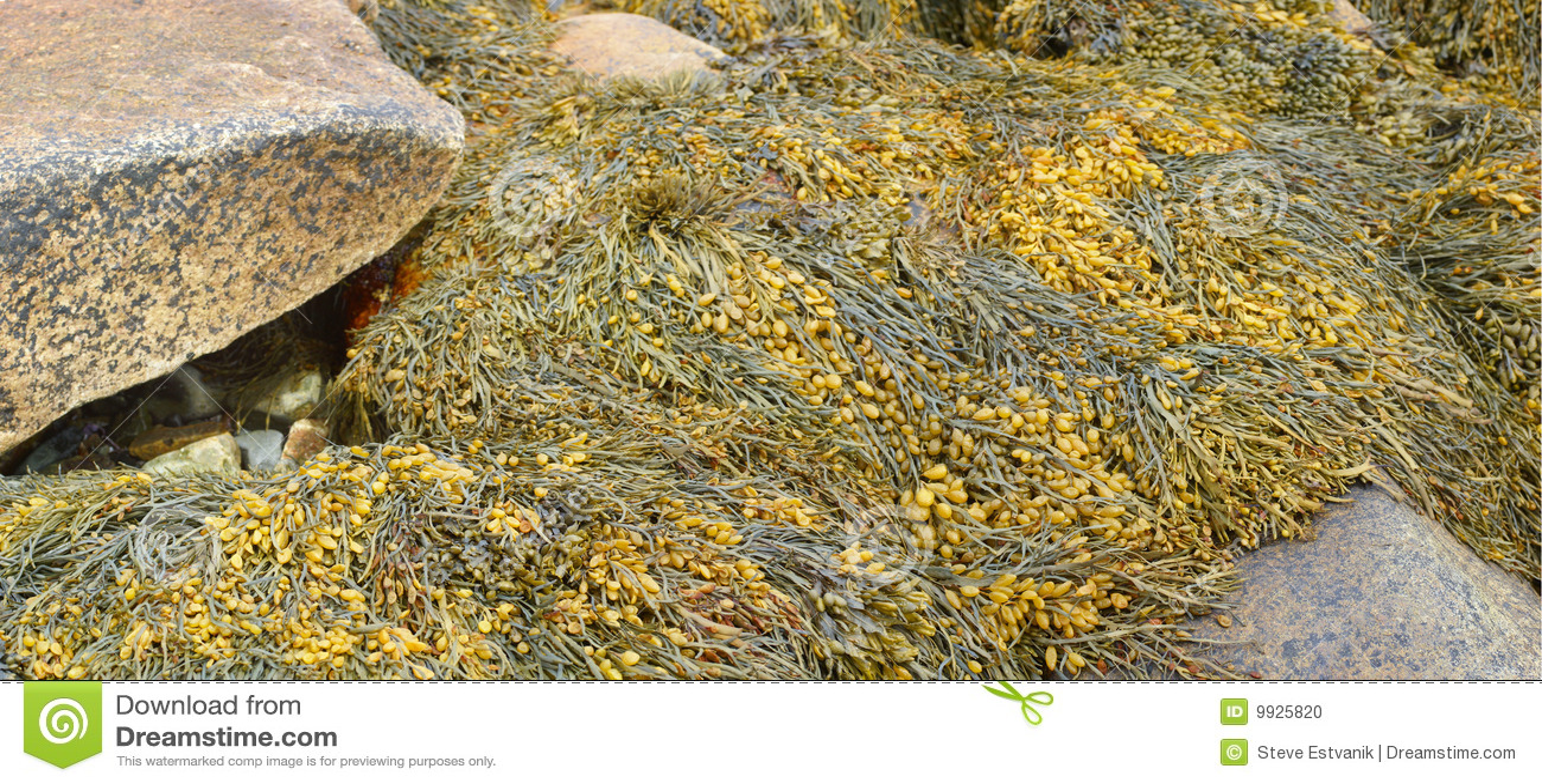 海滩详细资料海带晃动海草