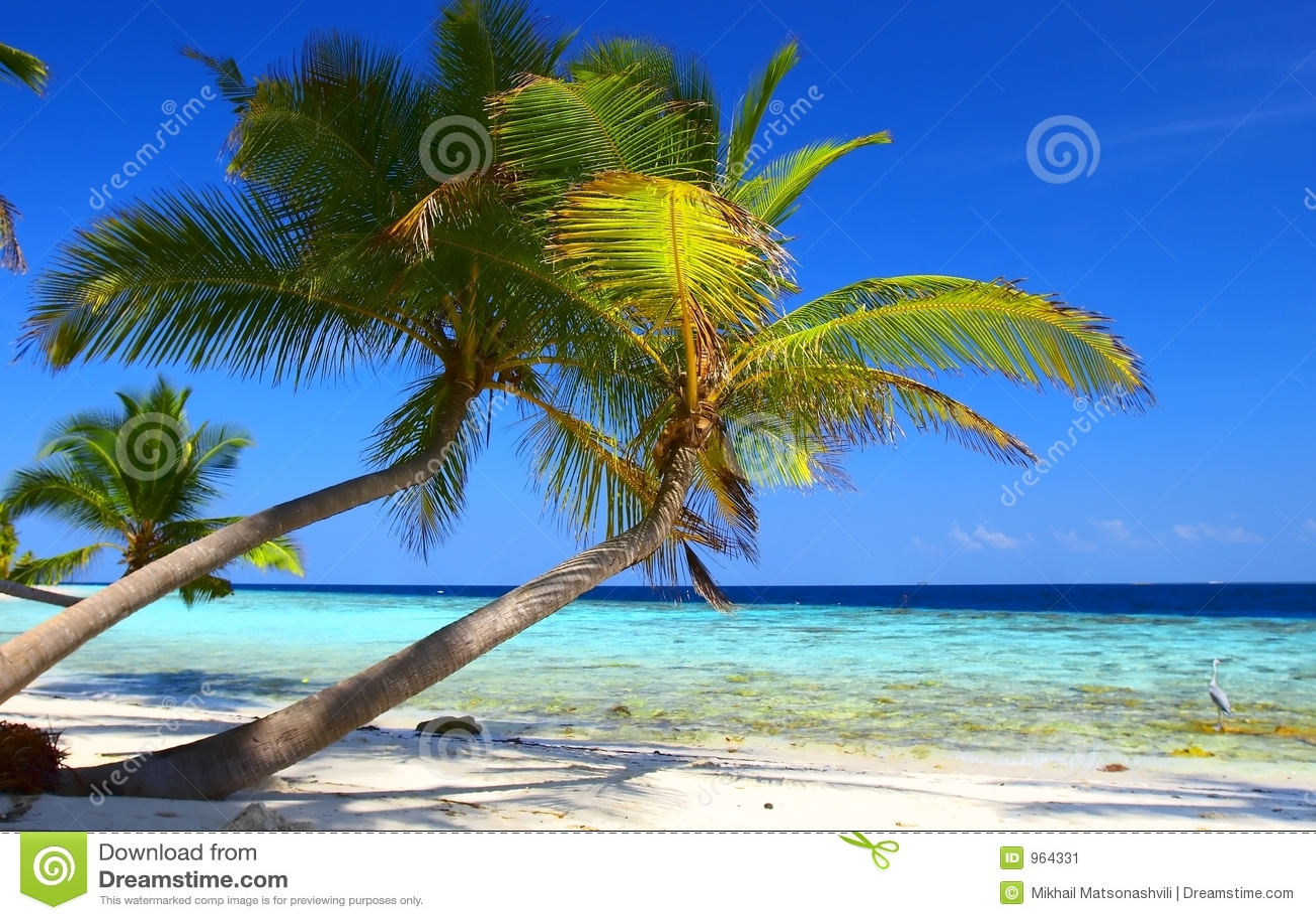 海滩鸟掌上型计算机现象结构树