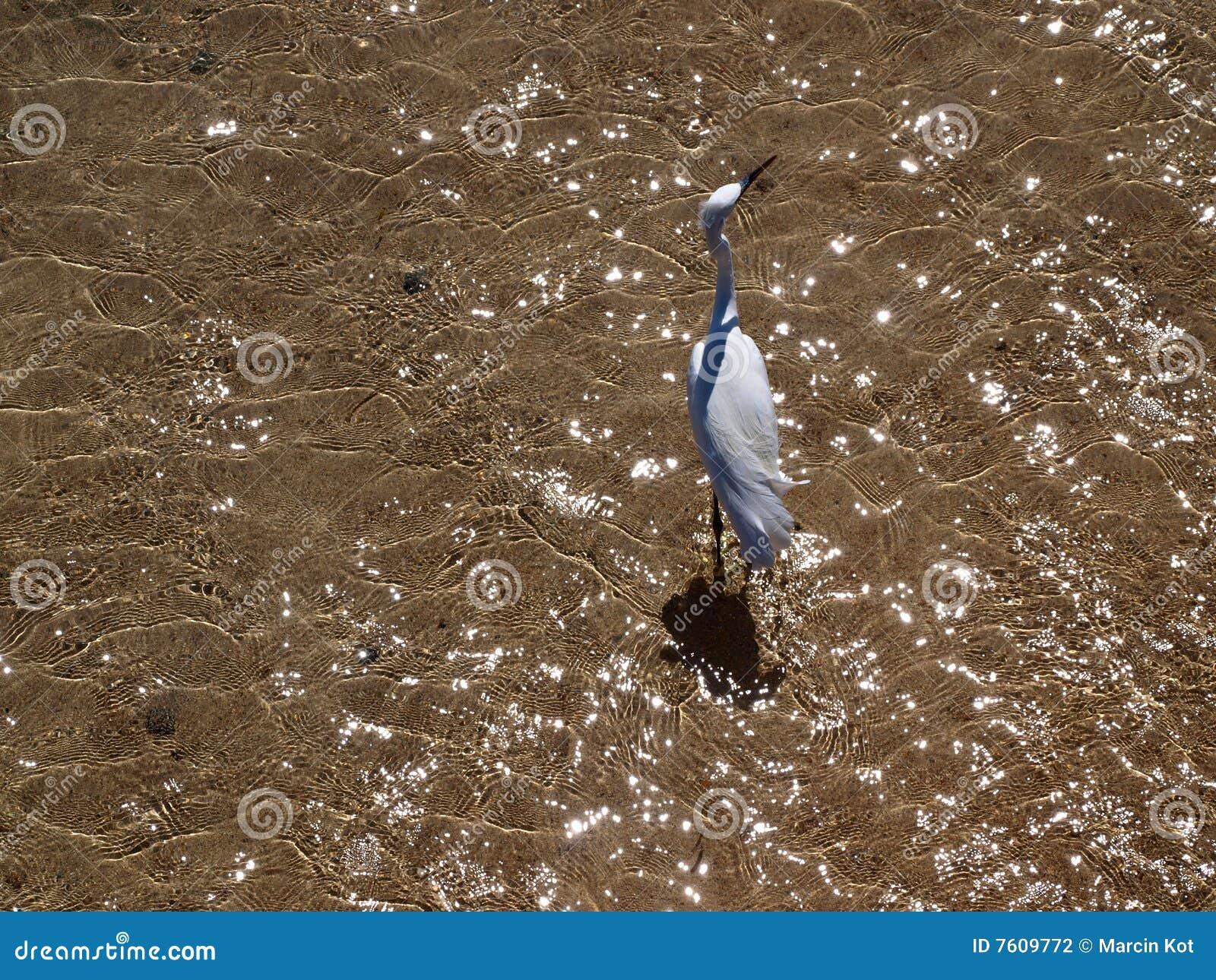 海滩鸟海运