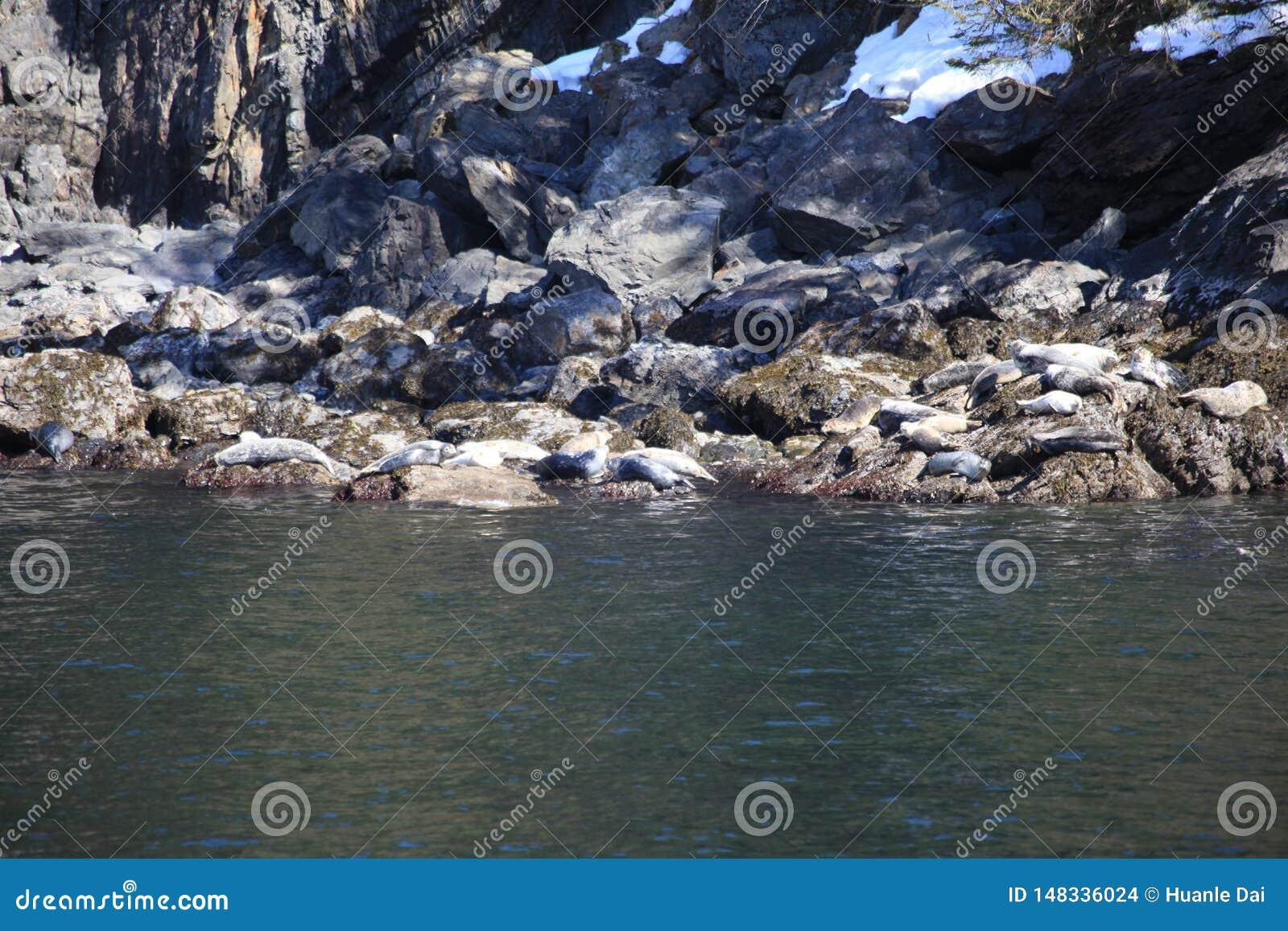 海狮,睡眠,岩石