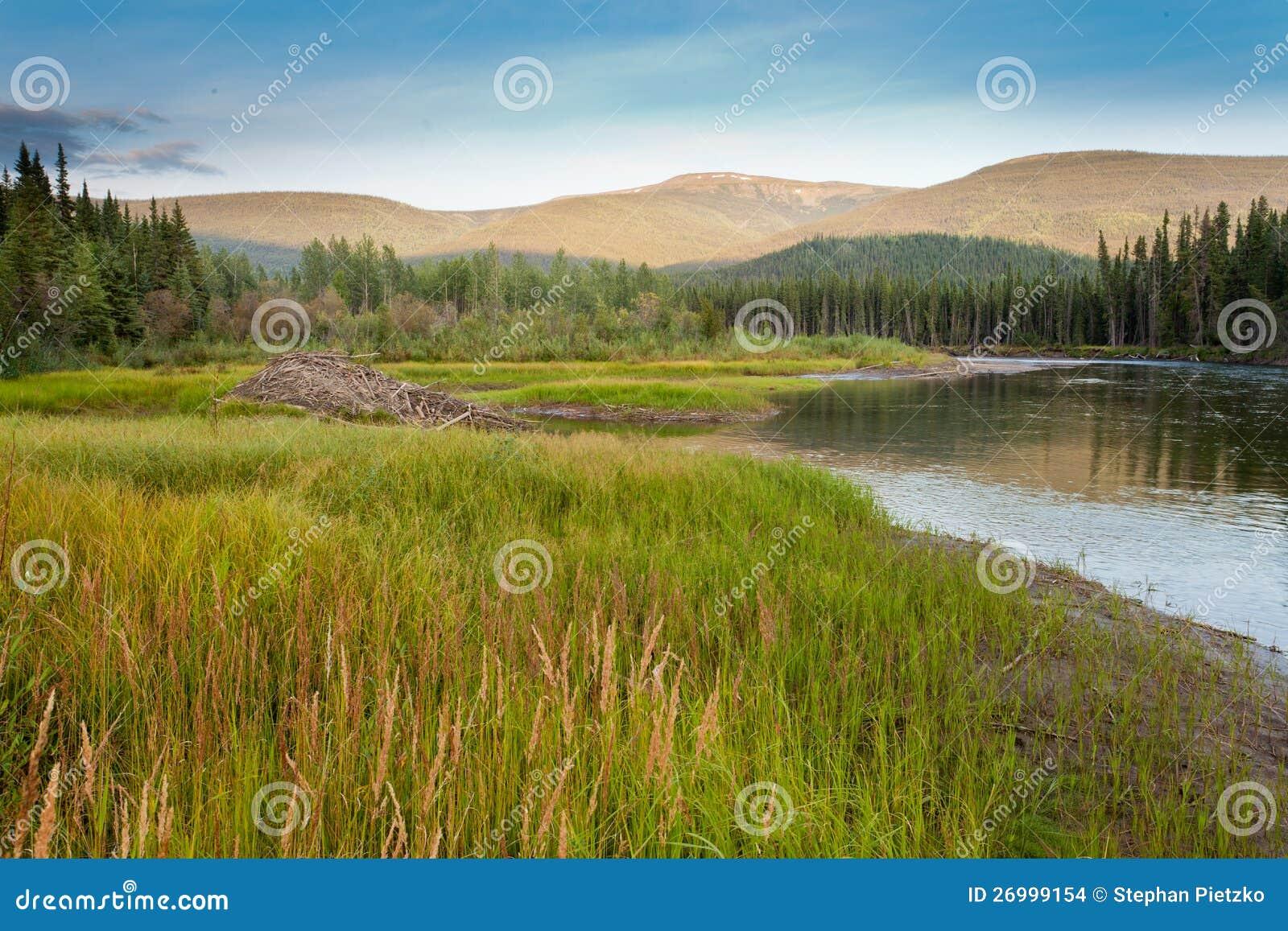 海狸铸工canadensis小屋在taiga沼泽地