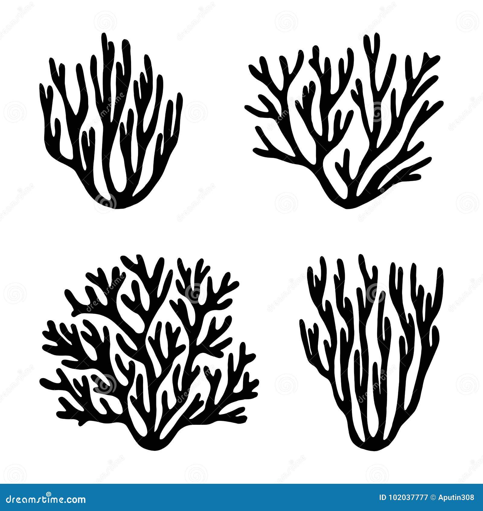 海珊瑚和被隔绝的海草黑剪影传染媒介