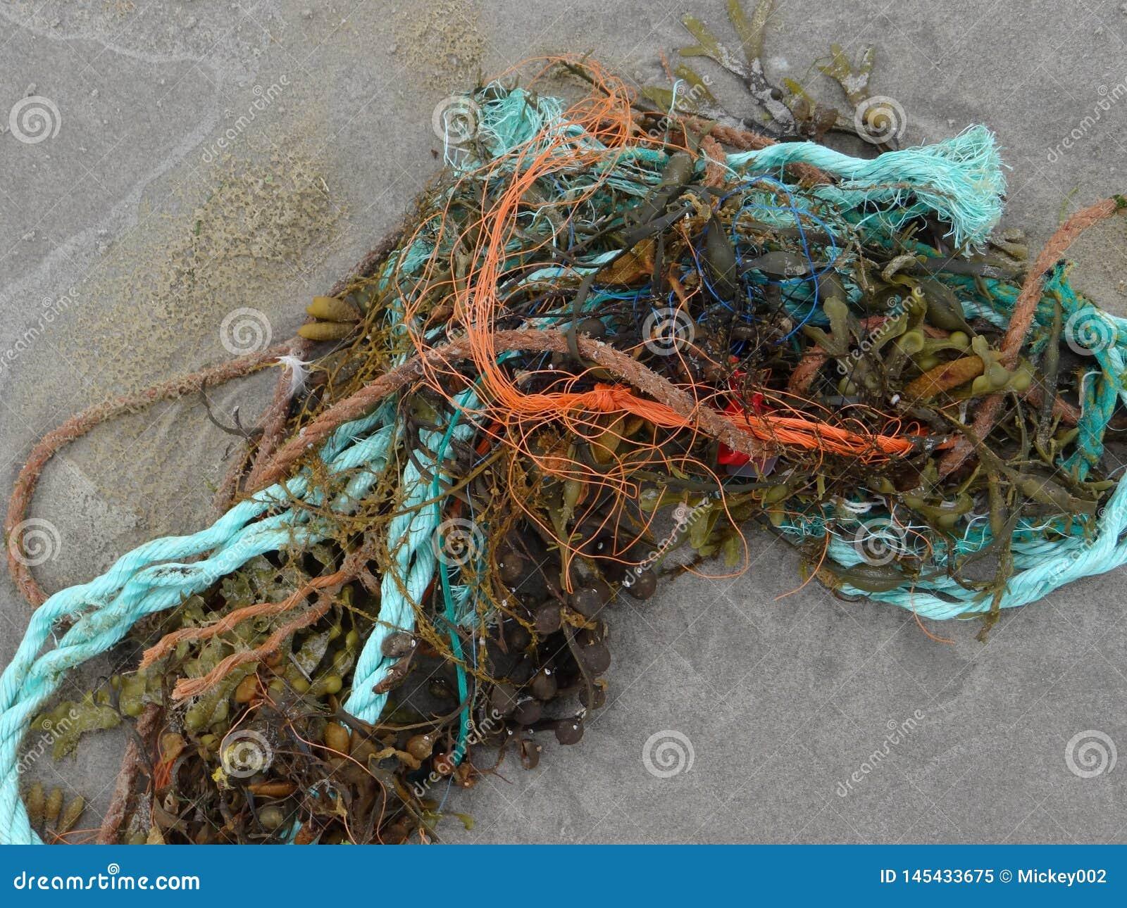 海草和绳索
