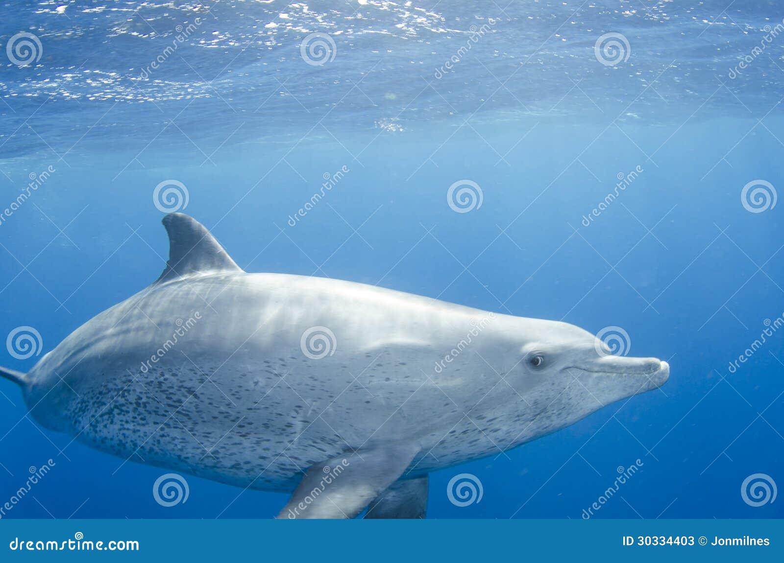 海豚游泳在海洋释放