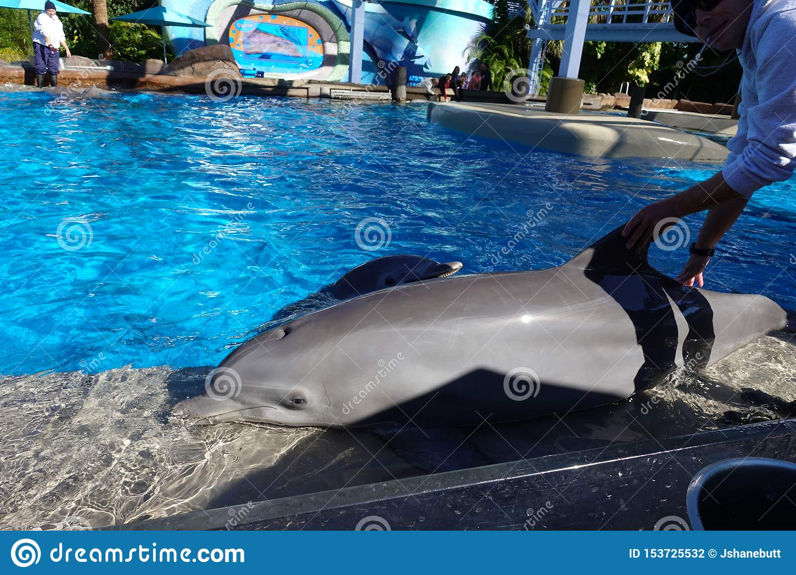 海豚被训练滑在墙壁上