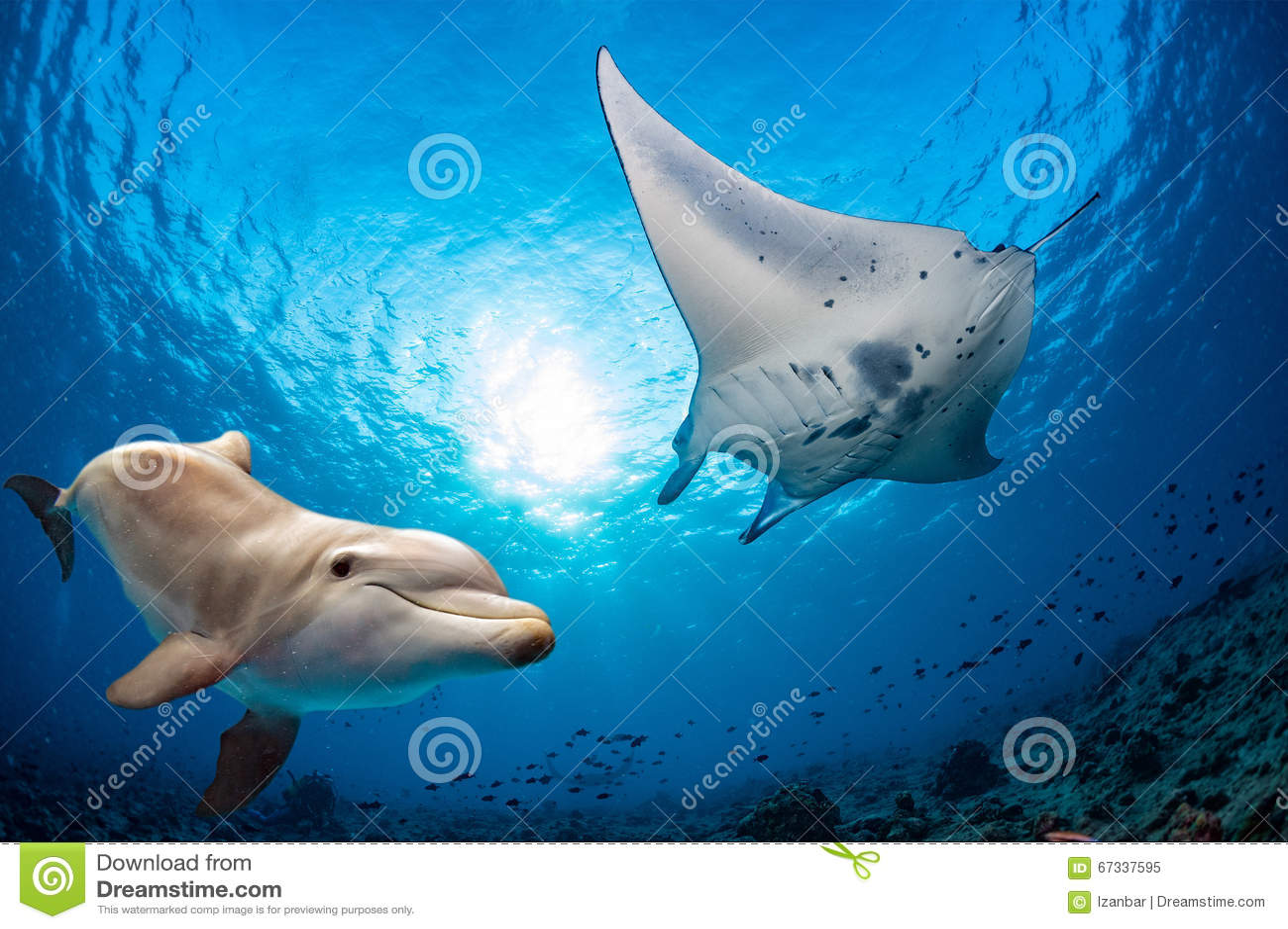 海豚水中遇见一个女用披巾