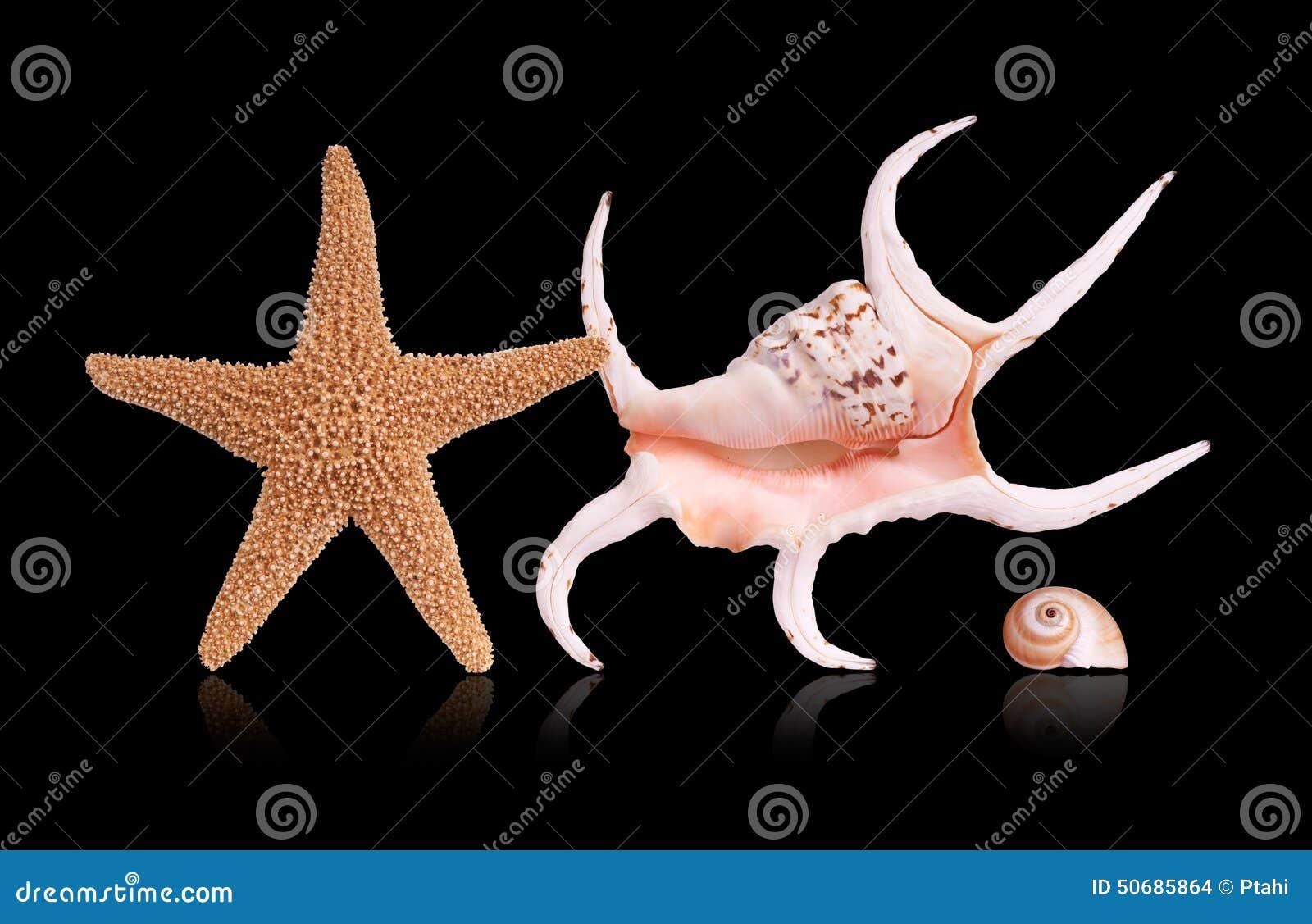 Download 海运轰击海星 库存照片. 图片 包括有 传记, 敌意, 贝类, 热带, 贝壳, 海星, 巧克力精炼机, 生活 - 50685864