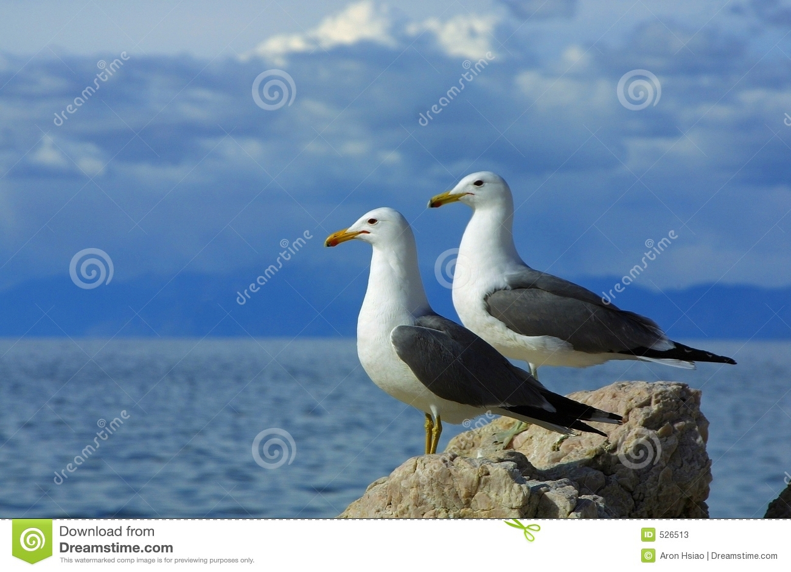 Download 海鸥副天空二 库存图片. 图片 包括有 栖息处, 云彩, 朋友, 岩石, scenics, 外面, 横向, 异乎寻常 - 526513