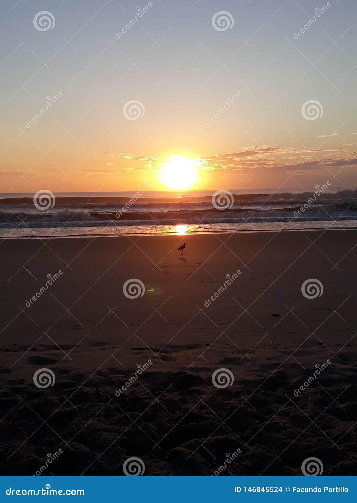 海鸥和黎明