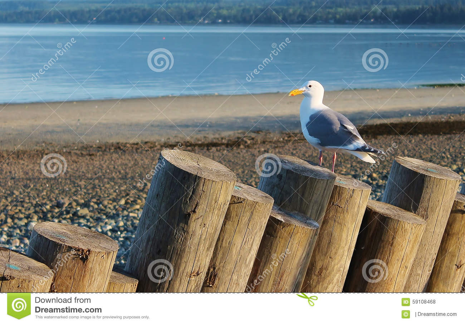 海鸥坐漂流木头