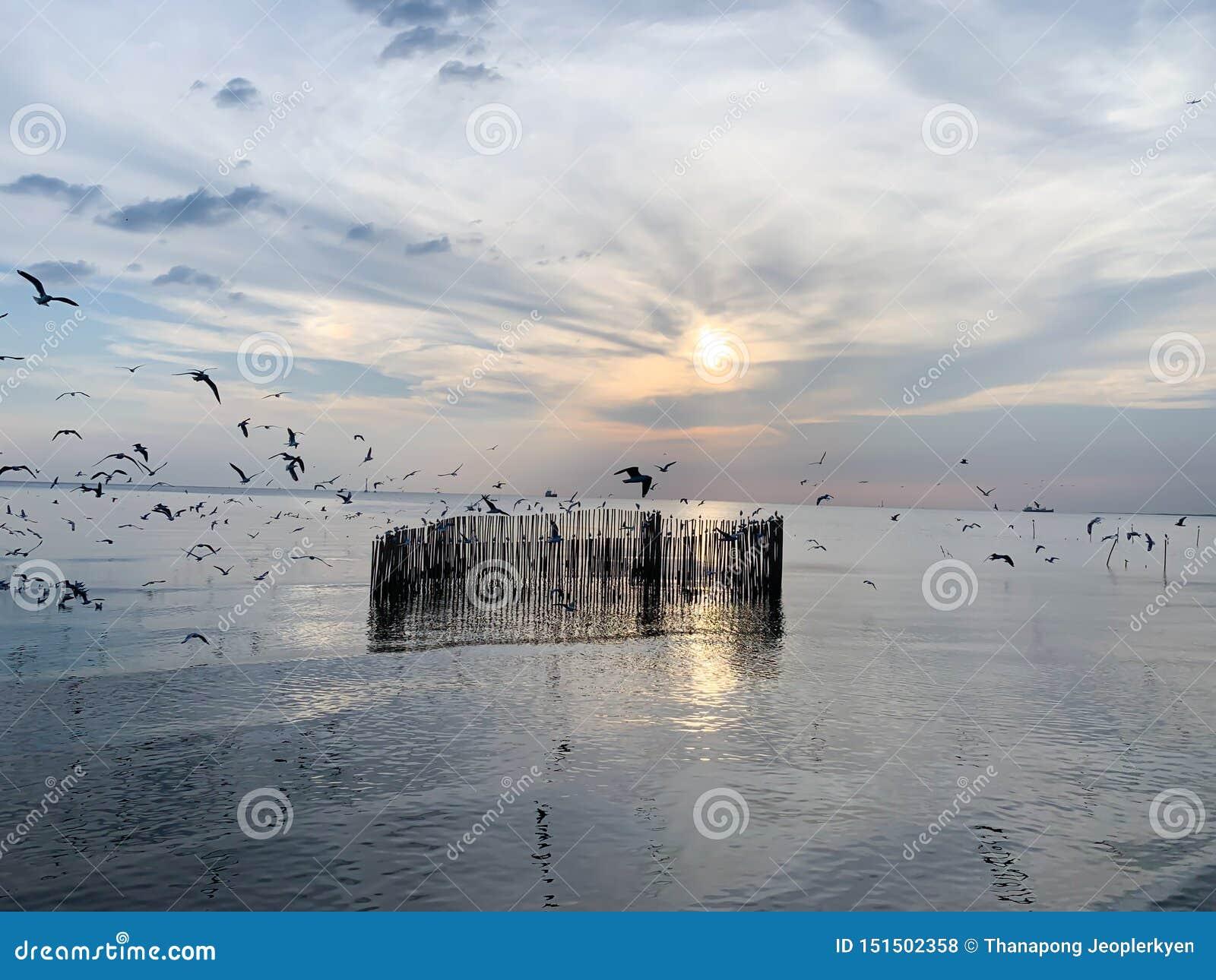 海鸥天空和海背景