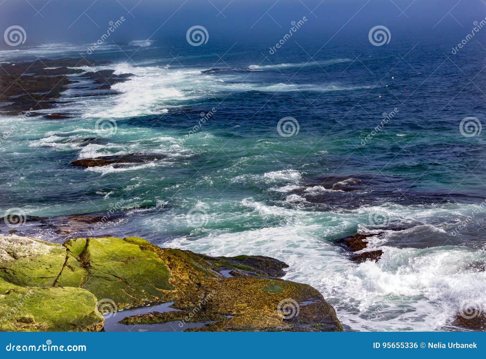 海鸥飞行,并且波浪碰撞反对岸在Beavertail, Jamest