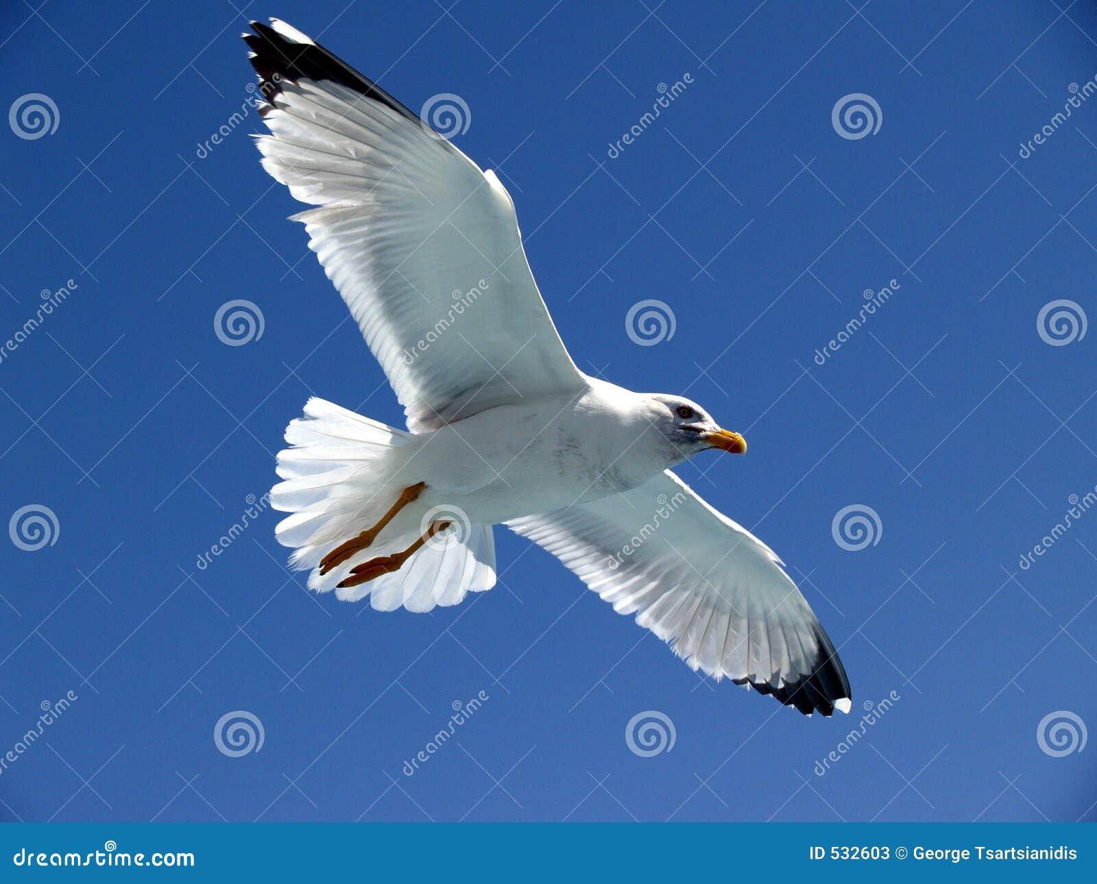 Download 海鸥 库存图片. 图片 包括有 鸟舍, 双翼飞机, 参见, 飞行, 开放, 喵喵叫 - 532603