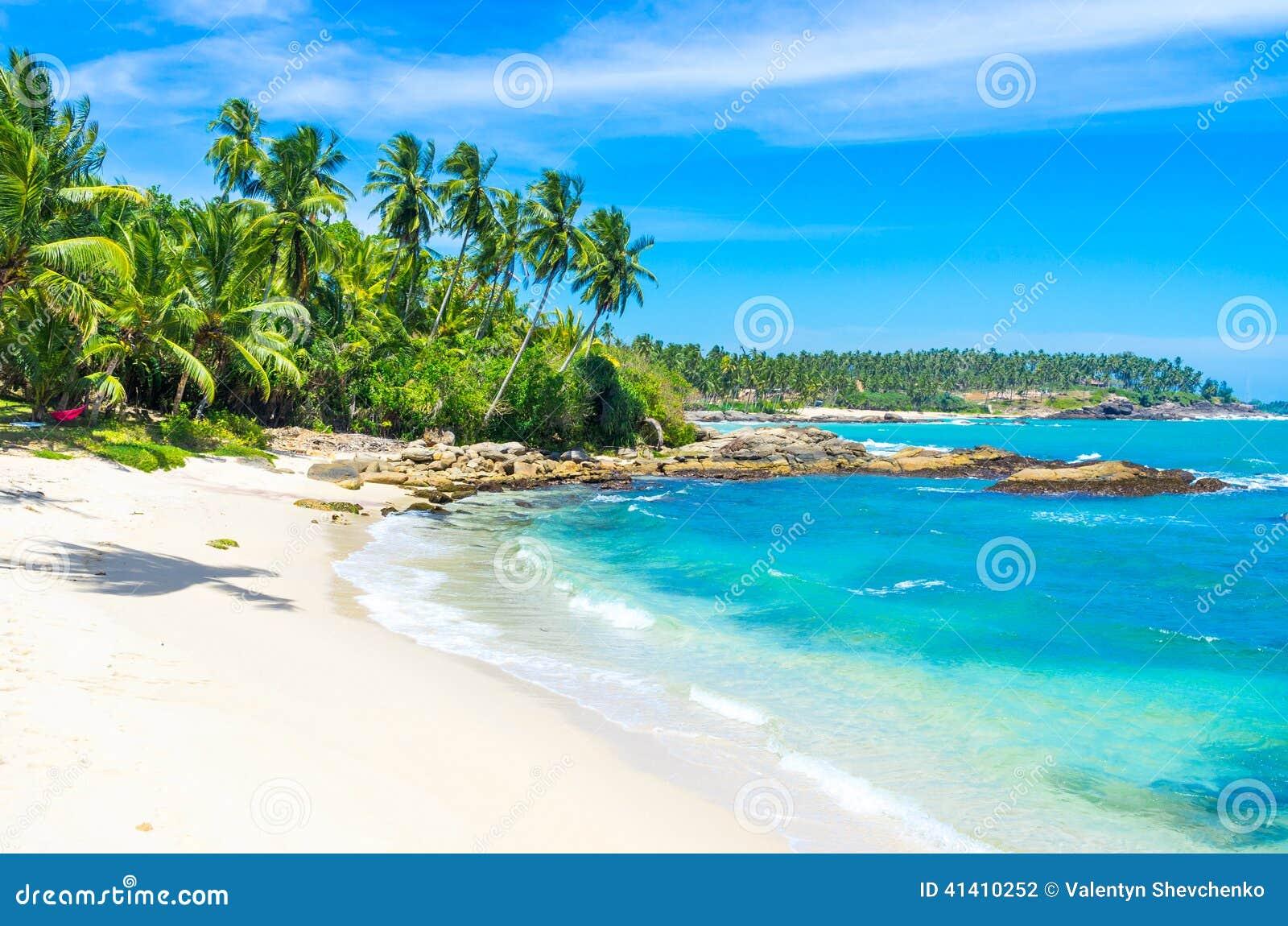 海滩夫妇狗前景lanka查找sri对热带走