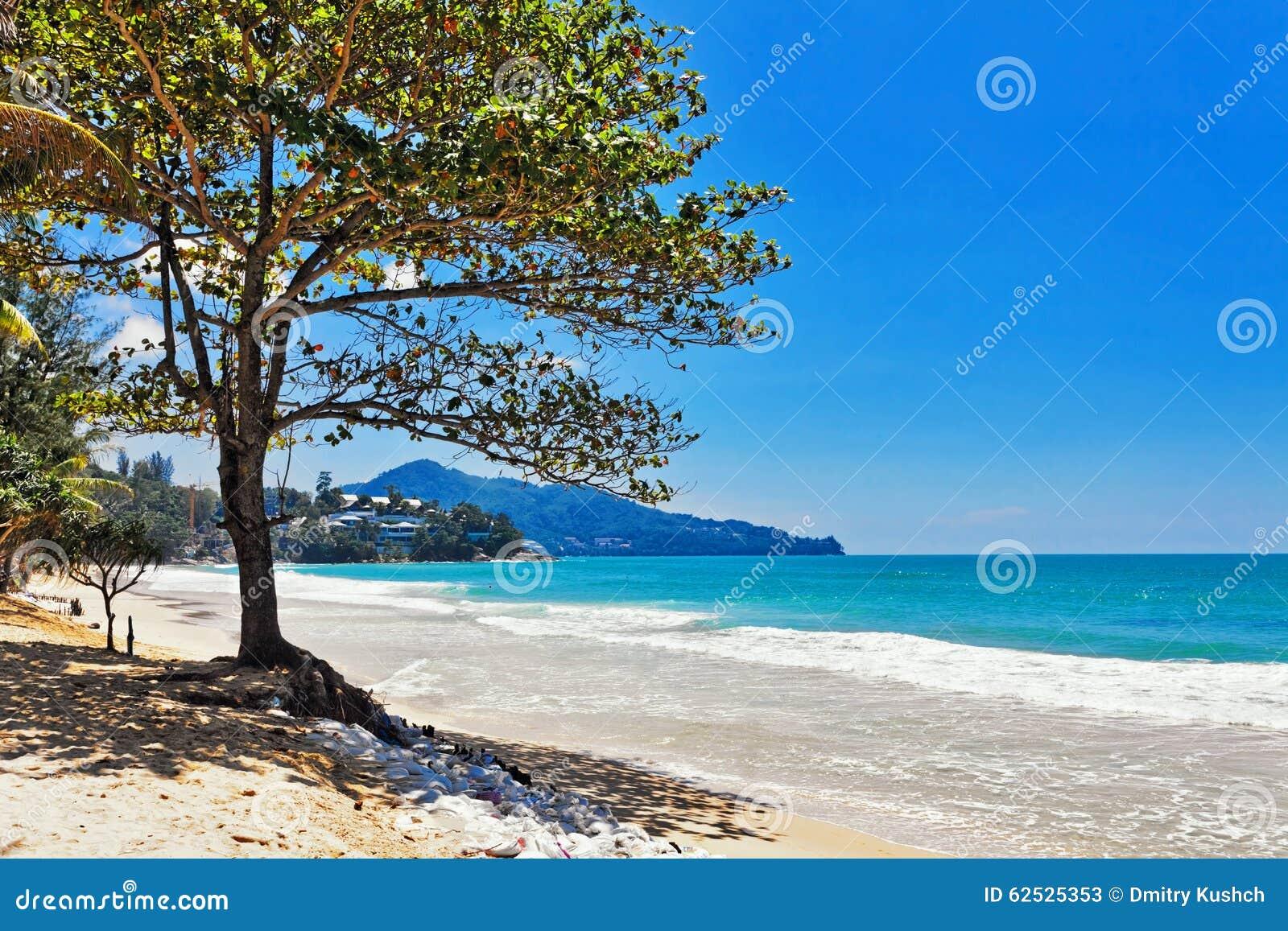 海滩异乎寻常热带