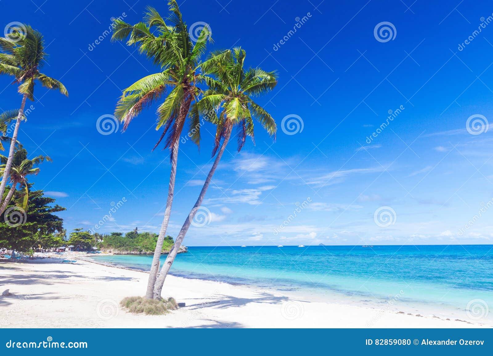 海滩热带的可可椰子