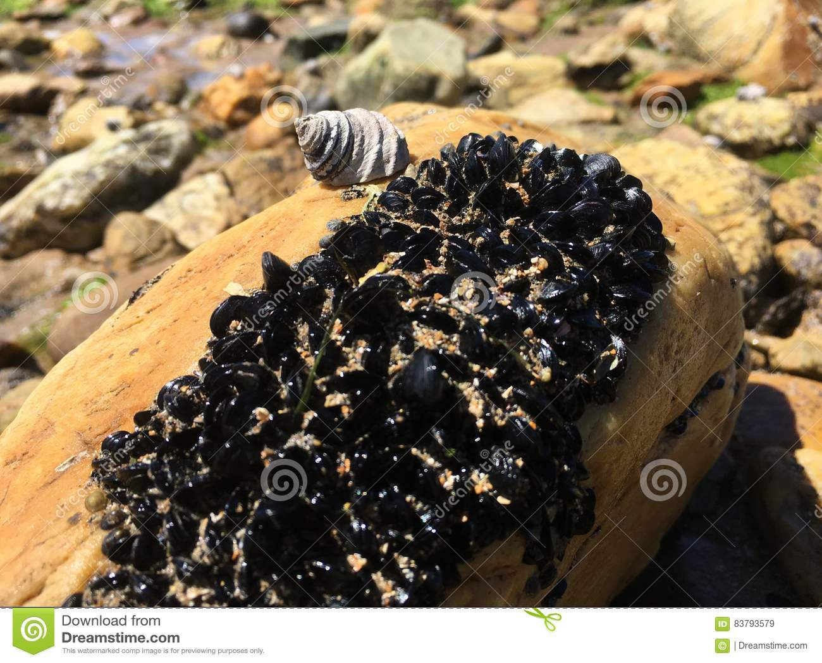 海洋蜗牛和淡菜