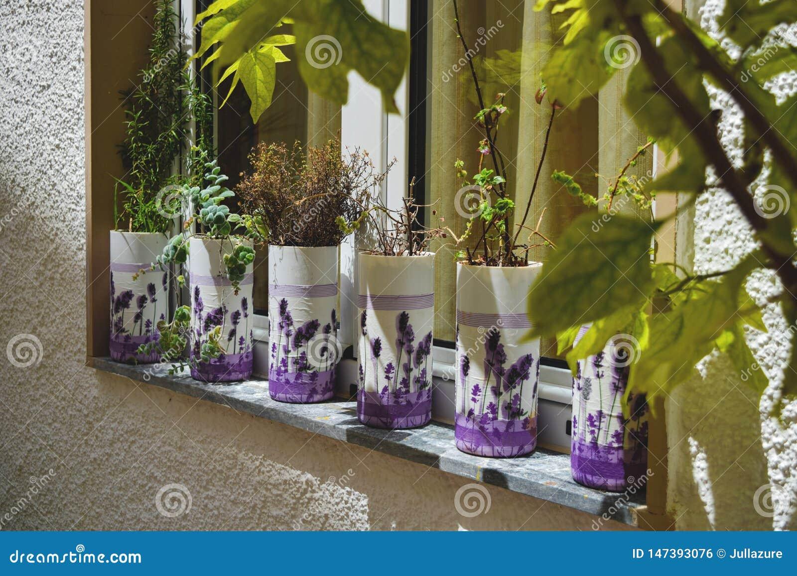 淡紫色花和多汁植物在罐在窗台