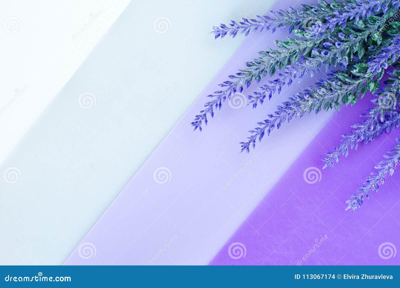 淡紫色花束在镶边白色灰色紫罗兰色背景放置