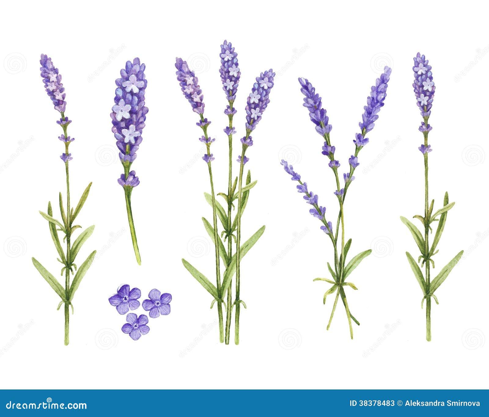 淡紫色开花汇集