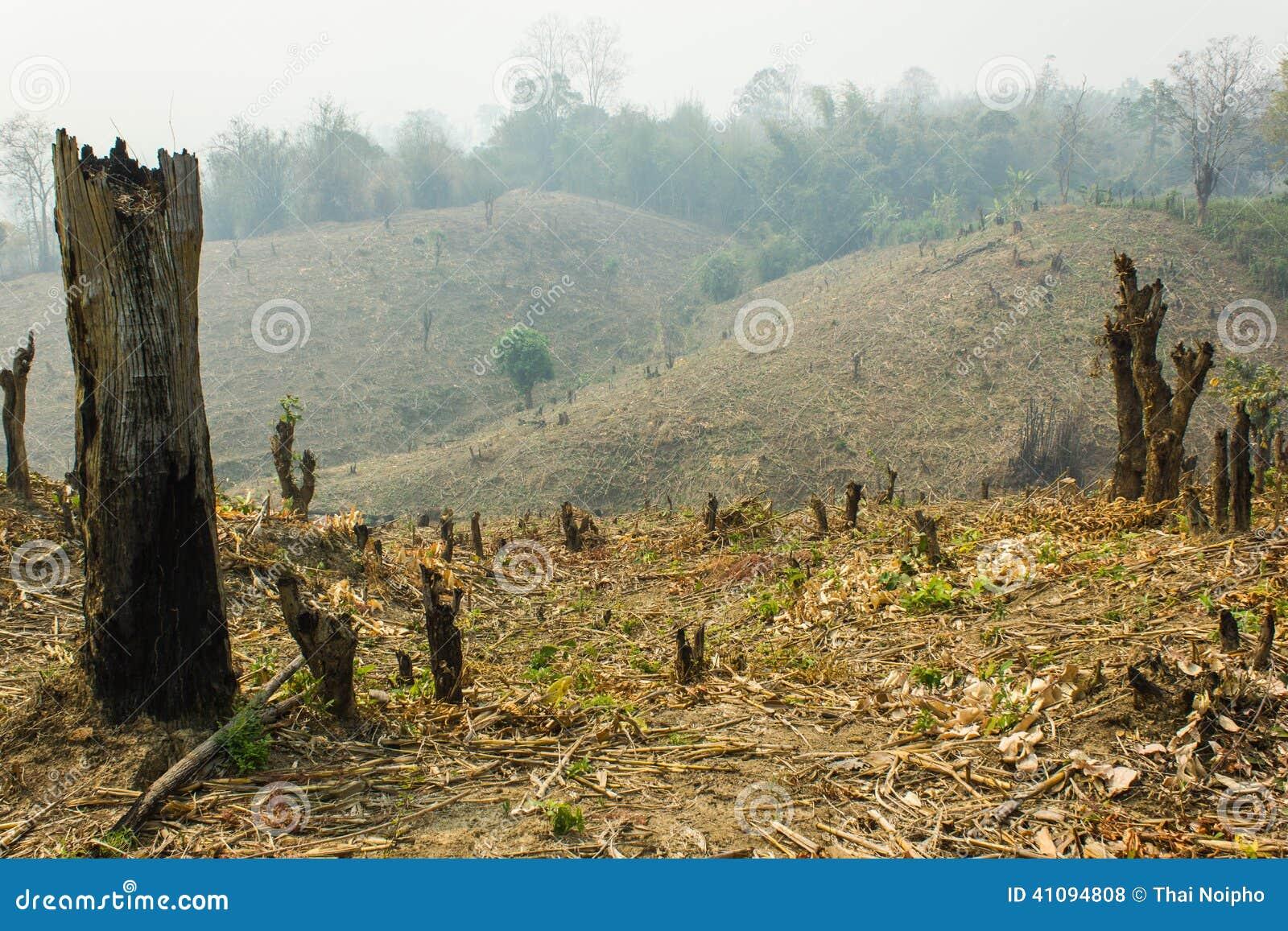 深砍和烧伤耕种