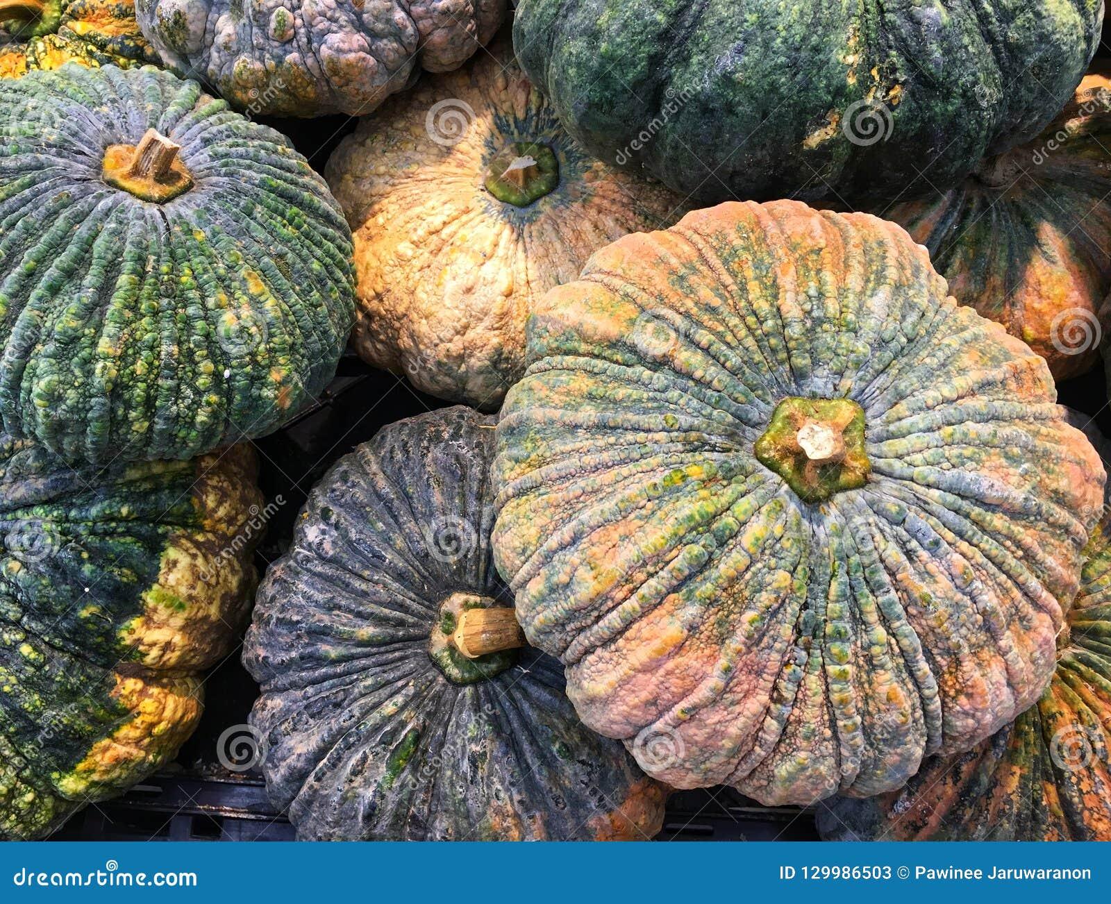 混合在秋天收获粗砺的皮肤和干燥茎的成熟和未加工的大南瓜