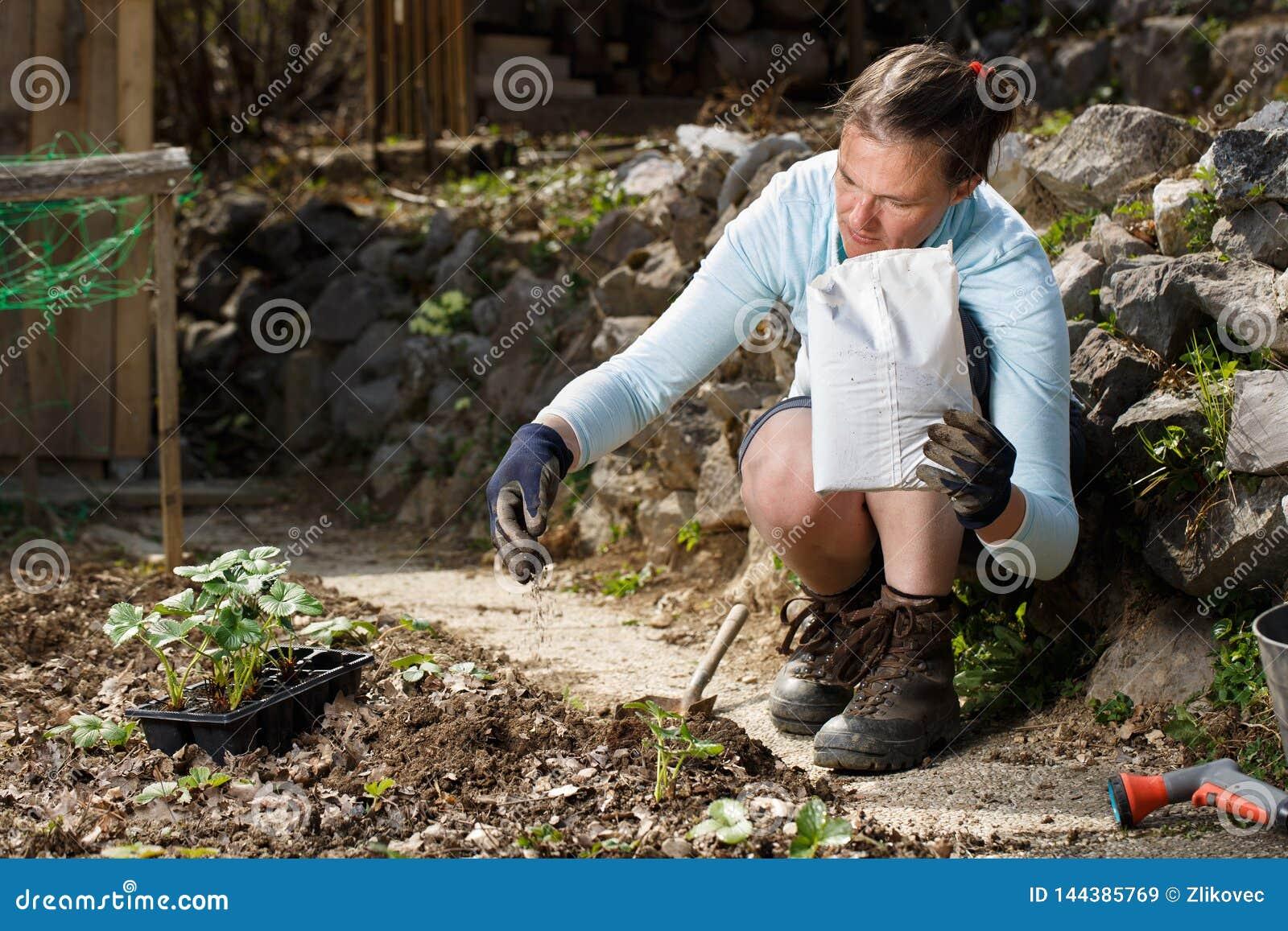 混和有机肥料腐殖粒子的花匠与土壤,丰富土壤
