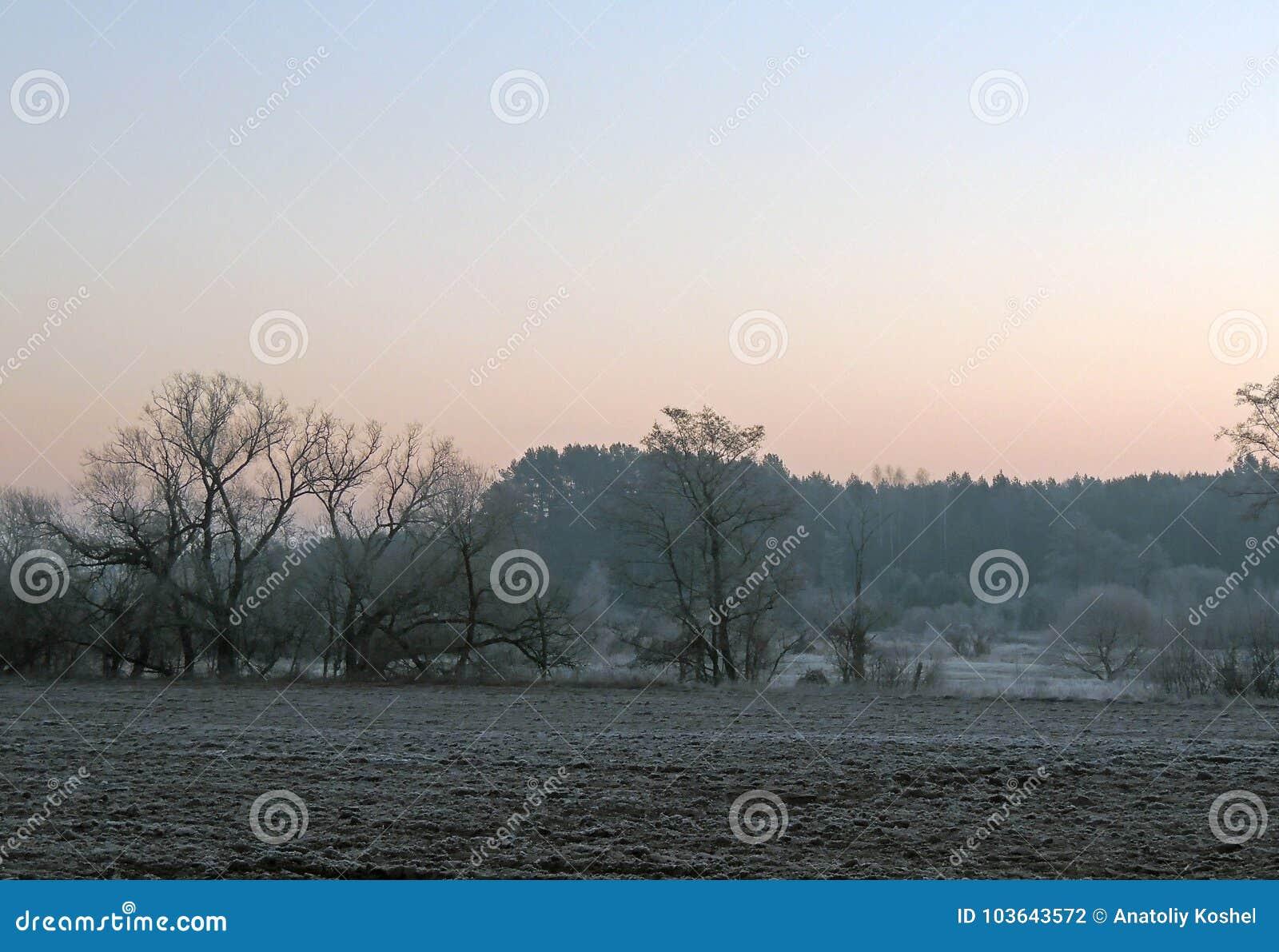 清早在11月底 杉木森林在Uzdensky区Neman Ri的米斯克地区第一霜起源
