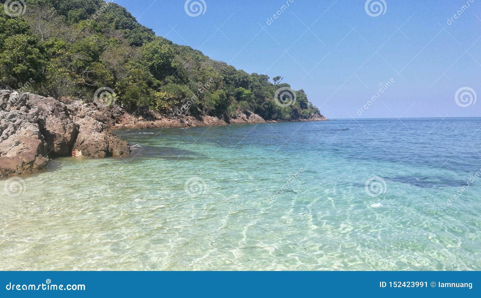 清楚的水晶海水风景在海滩的与热带森林蓝色海海岛,树荫和天空蔚蓝
