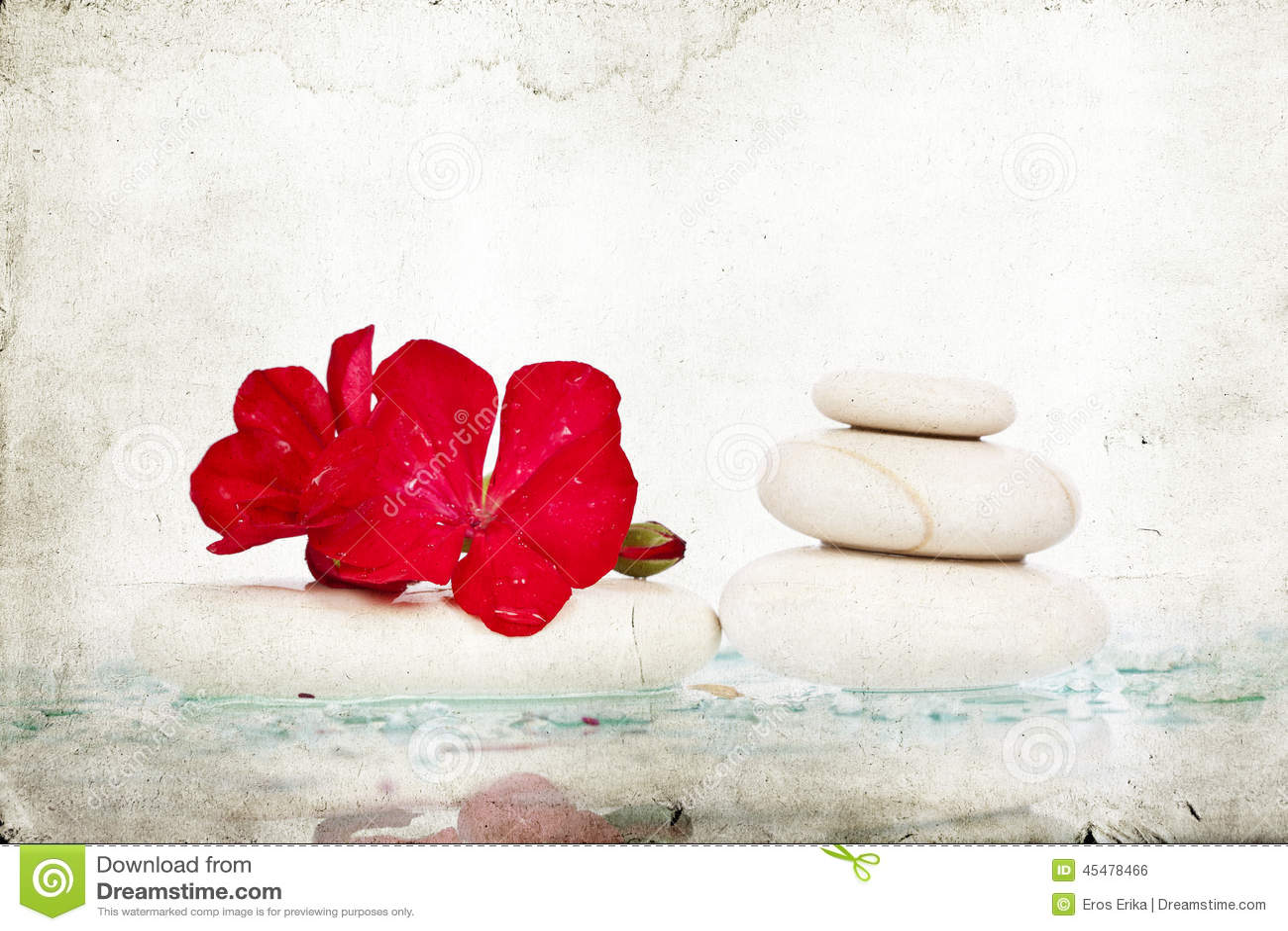 温泉石头和红色花