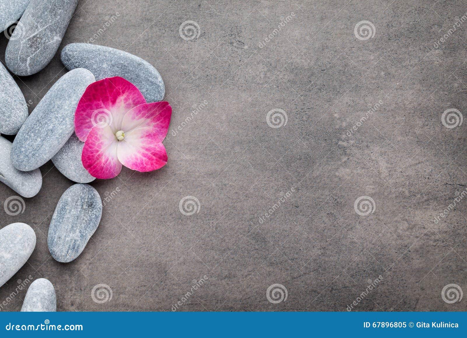 温泉石头和花,在灰色背景