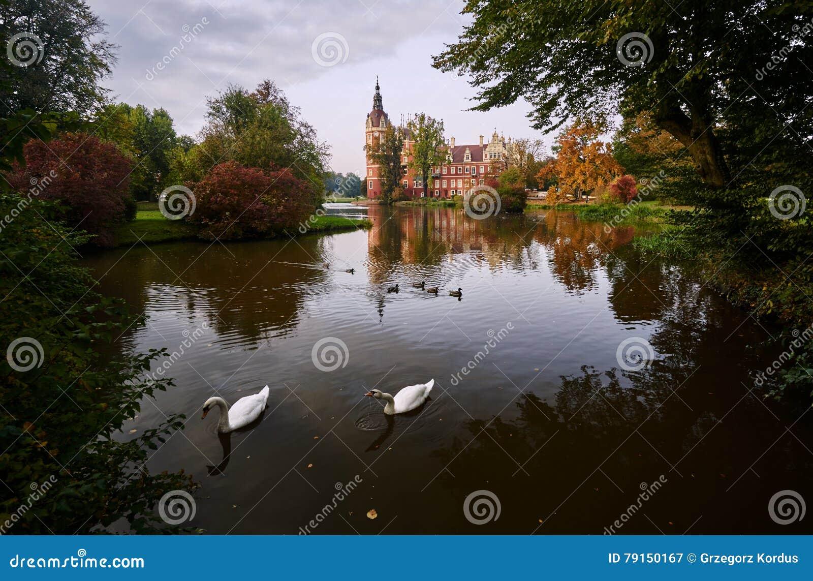 游泳在新的城堡前面的池塘的天鹅和鸭子