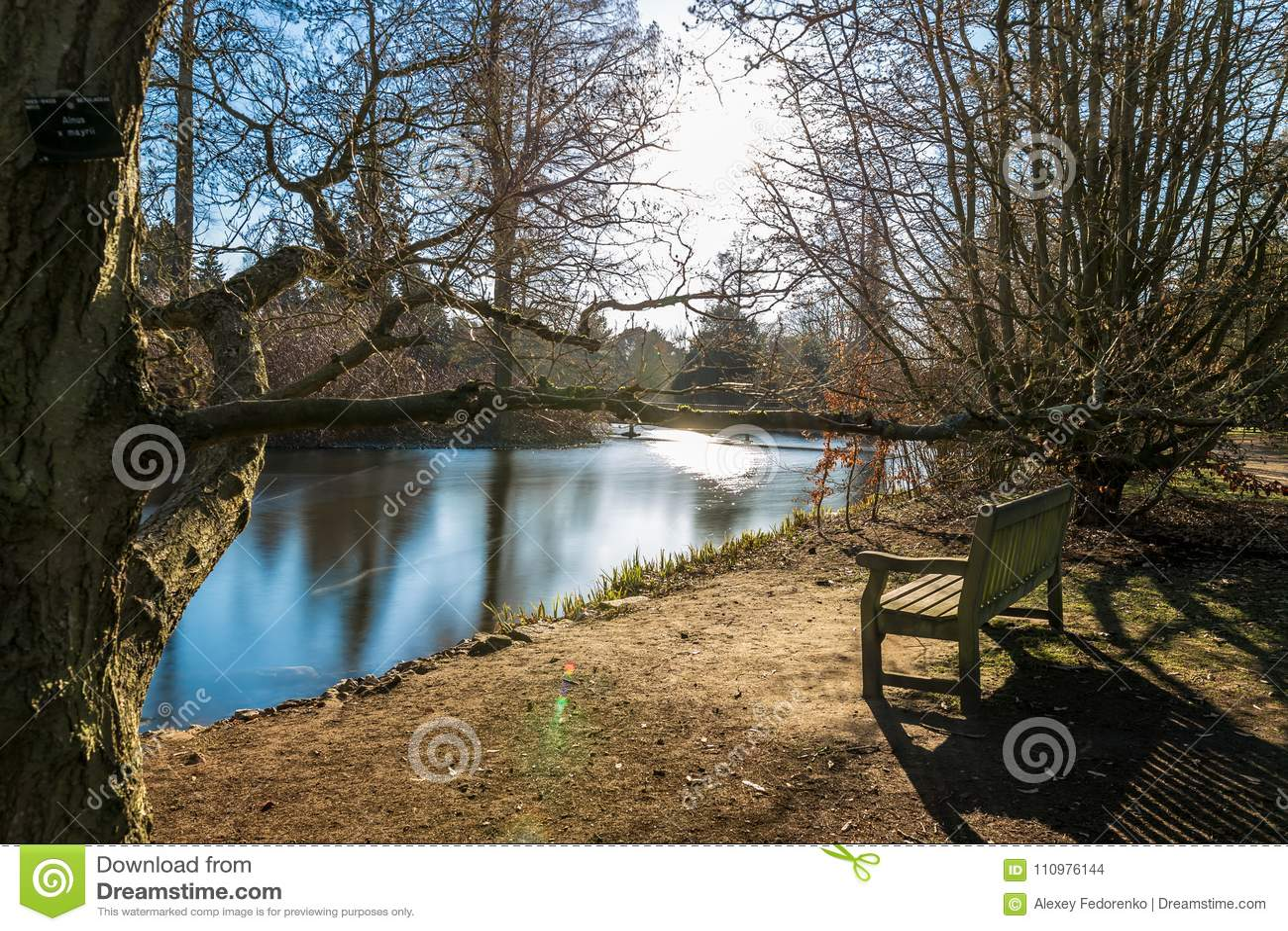湖在冬天在Kew庭院里,伦敦