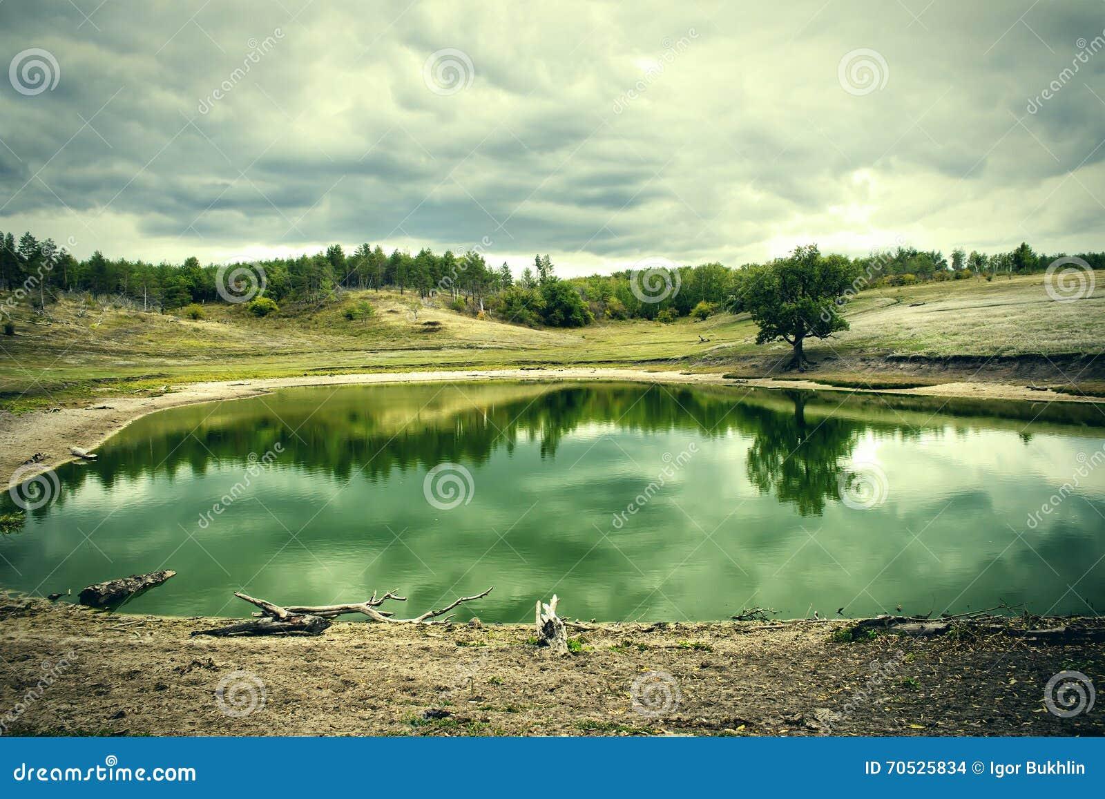 湖在多云天气的一个杉木森林里