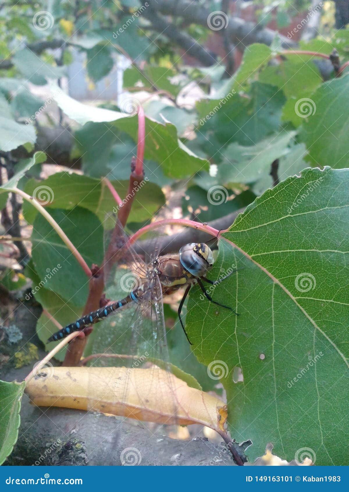 湖河旅游业动物蜻蜓昆虫