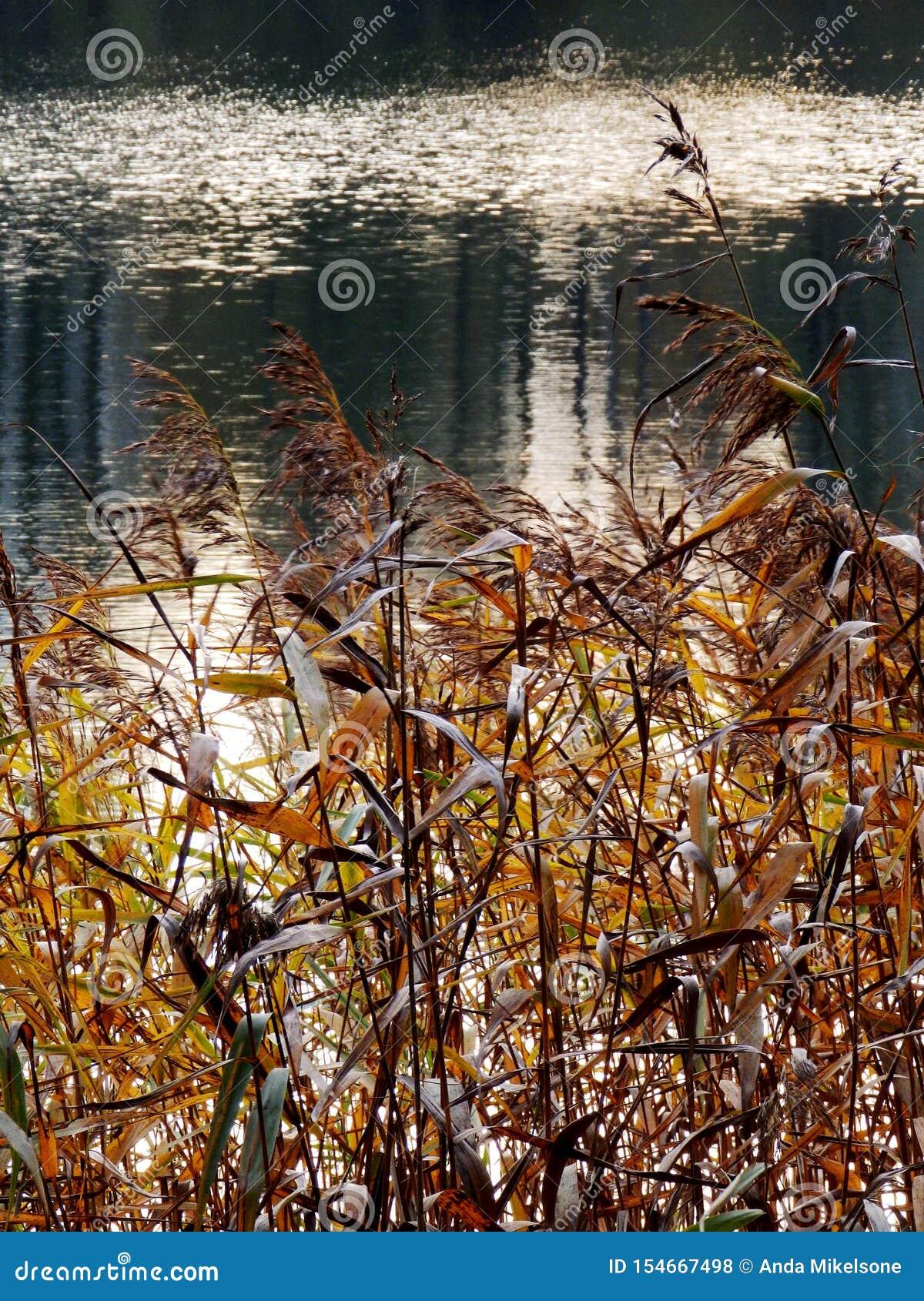 湖的秋天视图,