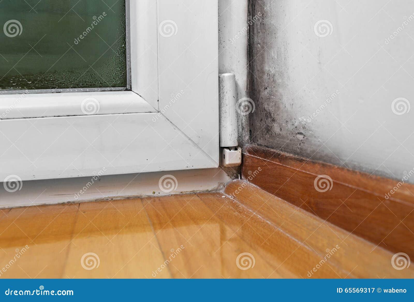 湿气和模子-问题在房子里
